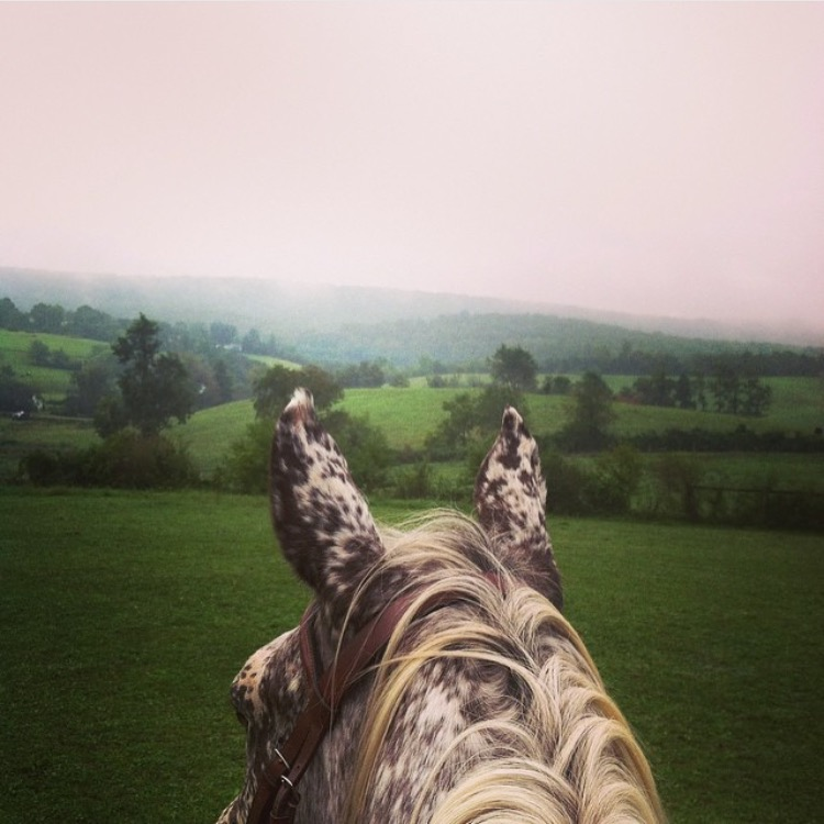 🔷 @natalie_cecile 🔷 says her horse is a Pintaloosa..... I'm crazy for all those spots!  ........ Tag your photo #lifebetweentheears for a chance to be featured. Ride On! ^^ ....... #equestrianlife #equestriantravel #equinephotography #pintaloosa #virginia #thankyou #nataliececile