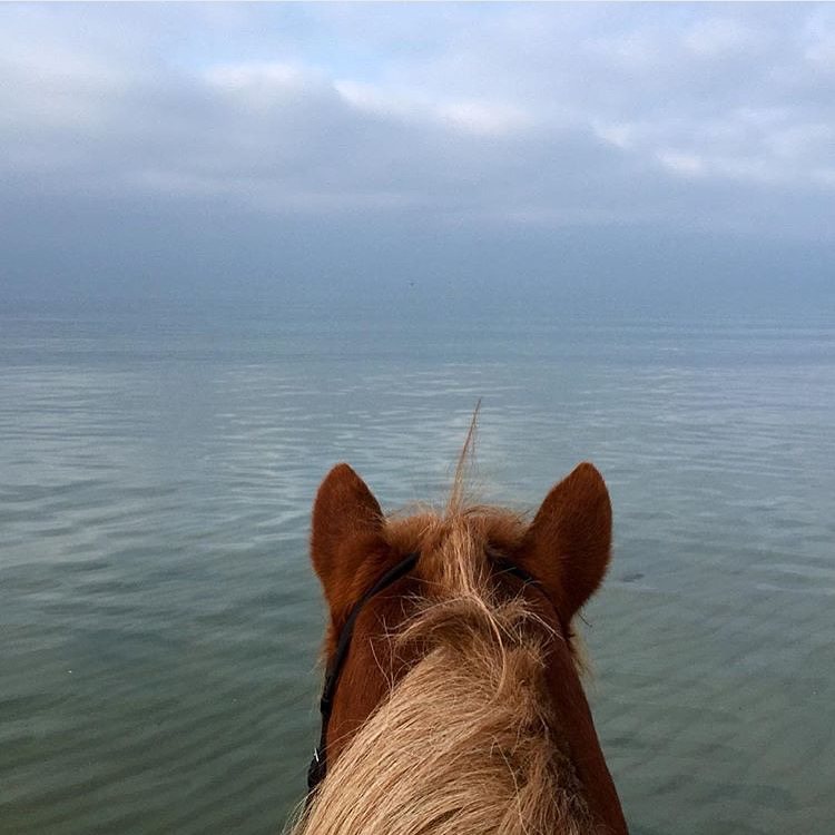 My soul wandered, happy, sad, unending.  - Pablo Neruda  Thanks to my longtime Insta-friend 🔷 @44mette 🔷 for this soothing slice of blue in Denmark.  .......   Tag your photo #lifebetweentheears for a chance to be featured. Ride On! ^^ ......... #equestriantravel #equinephotography #whatfeedsyoursoul #pabloneruda #tisvildelejestrand #denmark #thankyou #mette