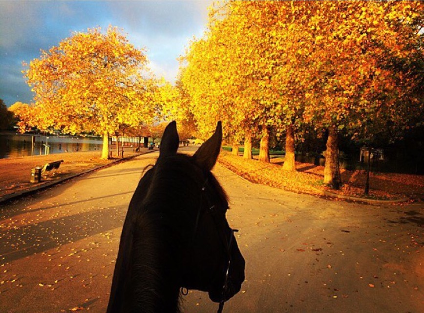 Fall-fest continues thanks to 🔷 @ophelia_h 🔷 on The Serpentine in Hyde Park, London. 💥 ........ Tag your photo #lifebetweentheears for a chance to be featured. Ride On! ^^ ......... #equestrianlife #equinephotography #equestriantravel #fallfest #fallcolor #saddleup #theserpentine #hydepark #london #thankyou #opheliahohler