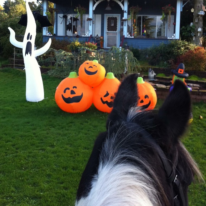 Kicking off our Halloween feature with a throw back of my own, to 2011 aboard my trusty steed, Baloo ( RIP ) visiting Mrs. Swanson, who has a blow up display for every single calendar holiday. She keeps our neighborhood colorful. Literally. ..... Tag your photo #lifebetweentheears for a chance to be featured. Ride On! ^^ ...... #halloween2015 #equinephotography #scary #boo #dockton #mrsswanson #baloo #rip