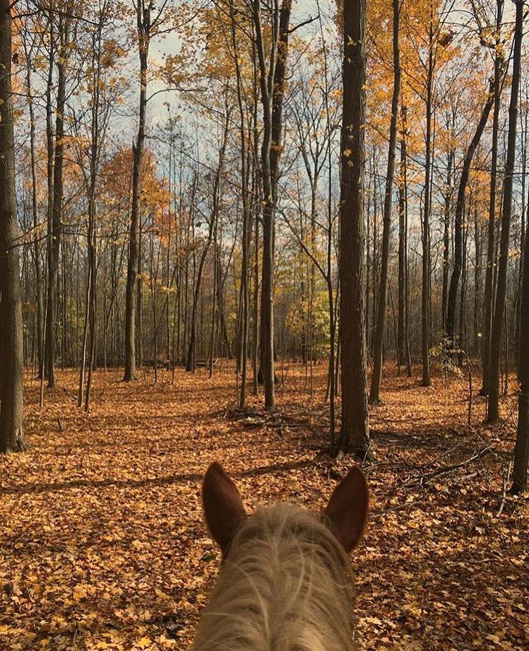Just when I thought it was wrapping up, more fall-fest! My absolute favorite time of the year. Thank you 🔷 @stephuhel 🔷 in Ohio! 🍂🍁 ....... Tag your photo #lifebetweentheears for a chance to be featured. Ride On! ^^ ...... #equestriantravel #equinephotography #fallcolor #orrville #ohio #instahorse #thankyou #steph