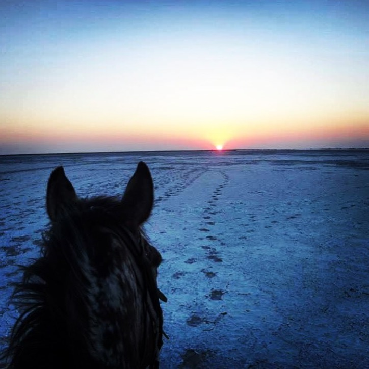 Have a great evening everyone and thanks 🔷 @ridebotswana 🔷 from Makgadikgadi Salt Pans for transporting us to Botswana.  ........ Tag your photo #lifebetweentheears for a chance to be featured. Ride On! ^^ ....... #equestrianphotography #equestriantravel #thankyou #davidfootsafaris #ighub #ridebotswana
