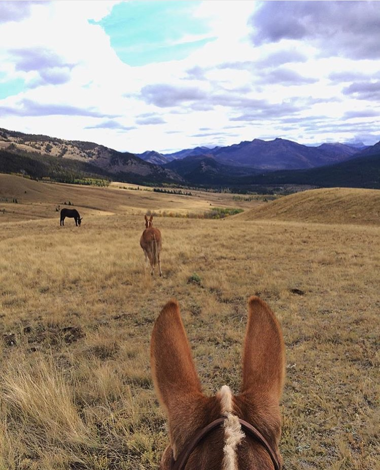 I love it when we get a pair of these jumbo ears. Thank you 🔷 @the_bandits_daughter 🔷/ Carla for this view in The Bob Marshall Wilderness aboard her splendid mule in Montana. The BMW is named in honor of an early forester, conservationist, and co-founder of the Wilderness Society. ......... Tag your photo #lifebetweentheears for a chance to be featured. Ride On! ^^ .......... #equinephotography #equestriantravel #bigskycountry #montana #bobmarshallwilderness #mule #carla