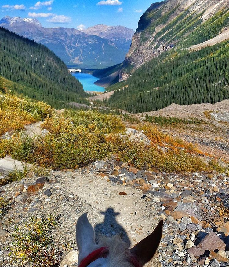 Thanks for the view from way up here, from horseback guide 🔷 @flyinfeathers 🔷, looking down to Lake Louise, in Alberta. ....... Tag your photo #lifebetweentheears for a chance to be featured. Ride On! ^^ ....... #equestrianadventure #equestrianphotography #backcountry #trailguide #lakelouise #alberta #canada #thankyou #flyinfeather