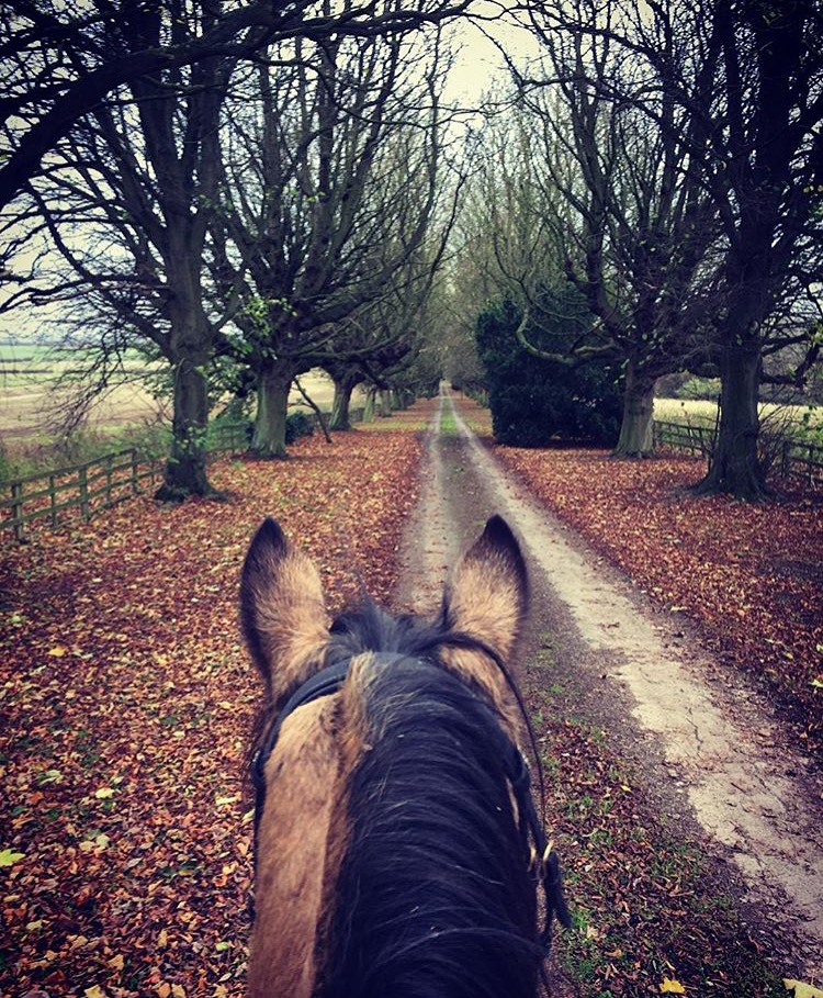 Thank you 🔷 @rachel_herbie_goldie 🔷 for reminding us of the good in the world. ....... Tag your photo #lifebetweentheears for a chance to be featured. Ride On! ^^ ...... #wearenotafraid #peace #northormsby #england #uk #sectiond #welshcob #thankyou #rachel