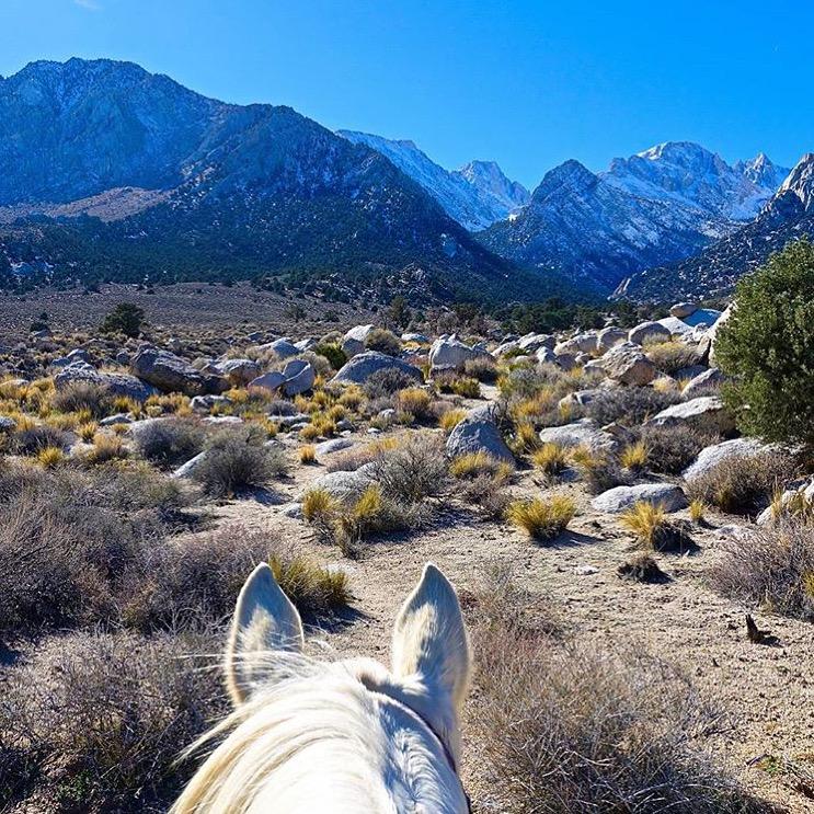 horsepoor4ever.jpg