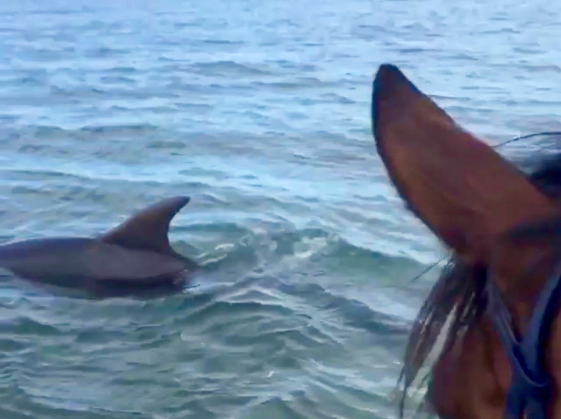 Thanks to our friends over at  Horse Network  for sharing this delightful video this morning. Have a great week everybody!  🐬  🐴   Tag your photo  #LifeBetweenTheEars  for a chance to be featured.