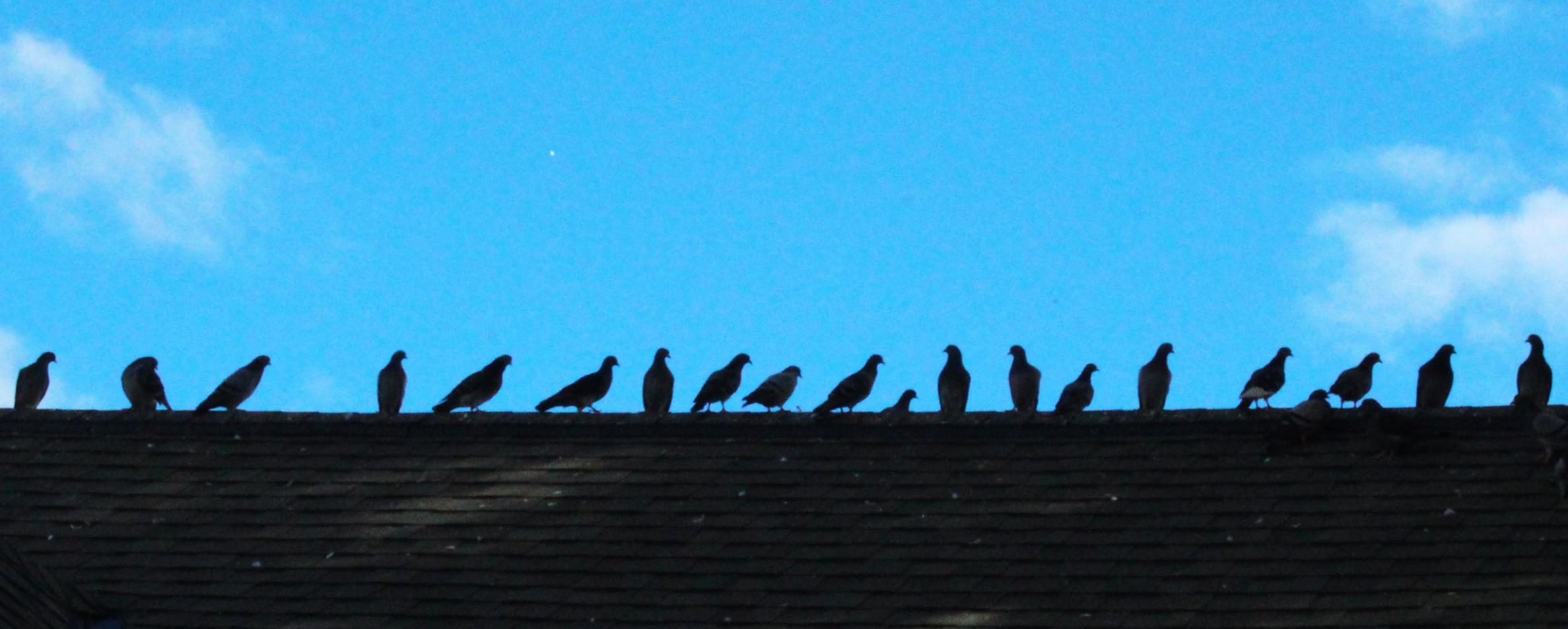 bird bancroft.jpg