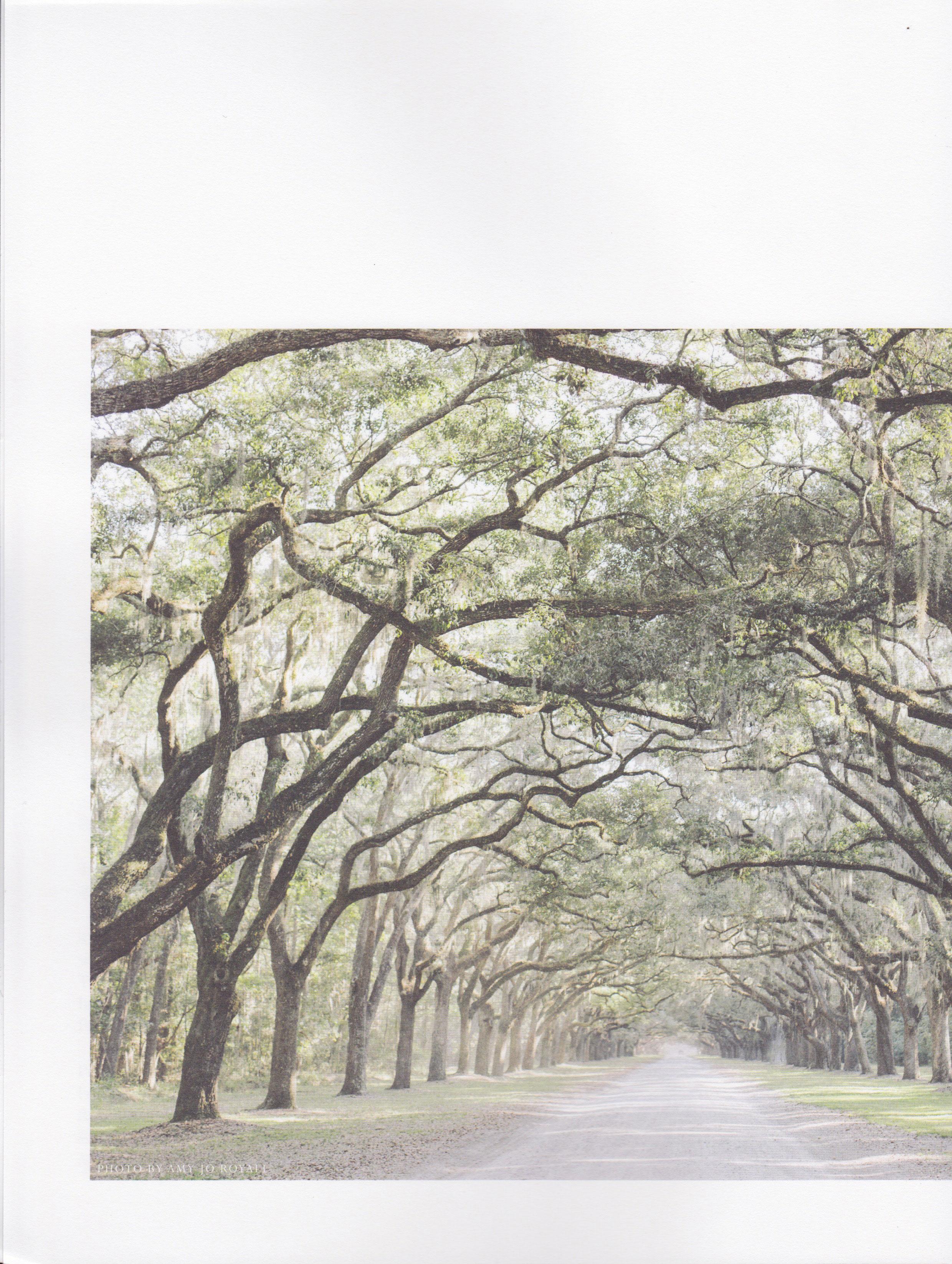 kendra-aronson-hearth-magazine-isobell-designs-6.jpg