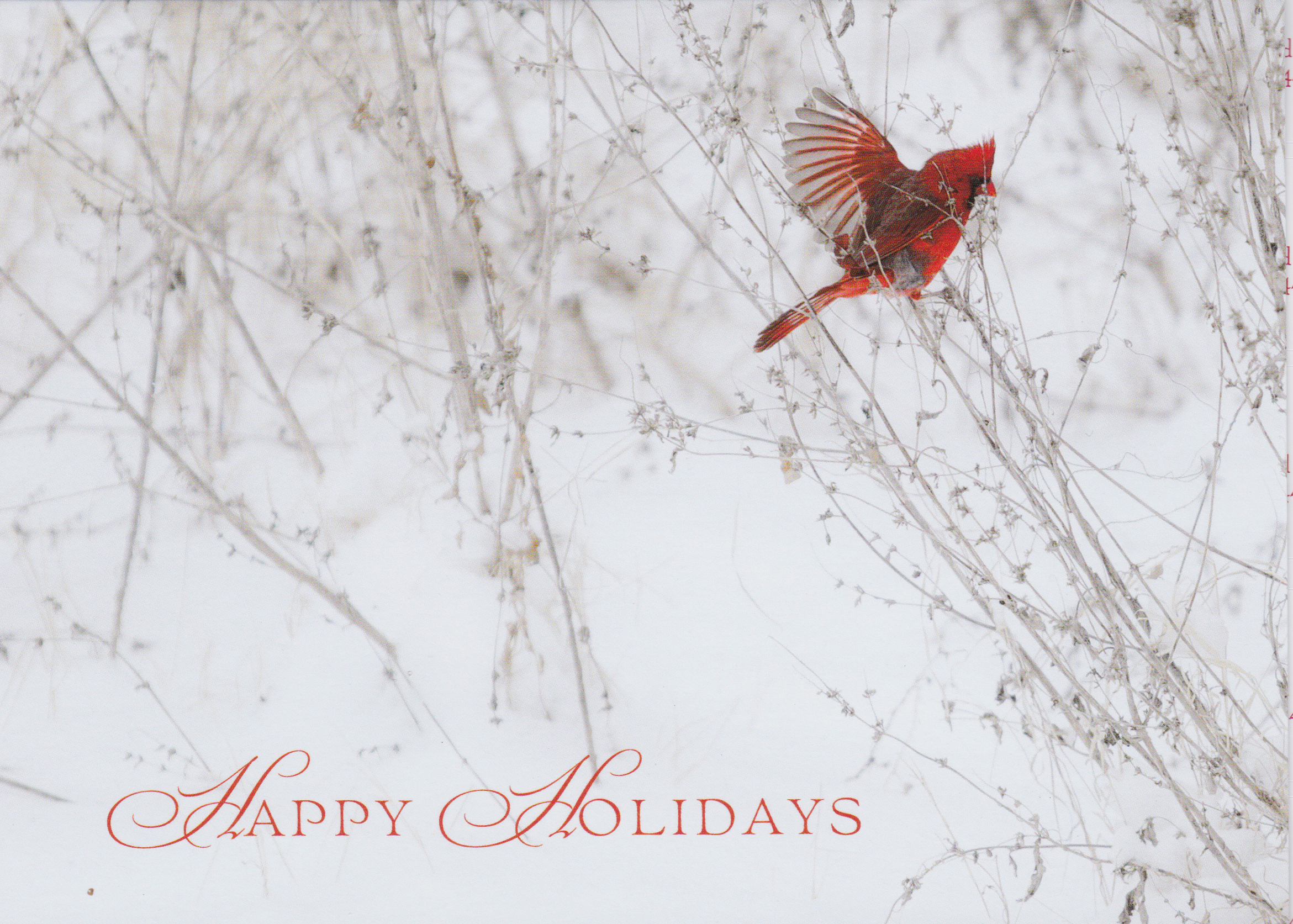 Remembering Jackie. She always loved the cardinals in our yard and at the feeders.