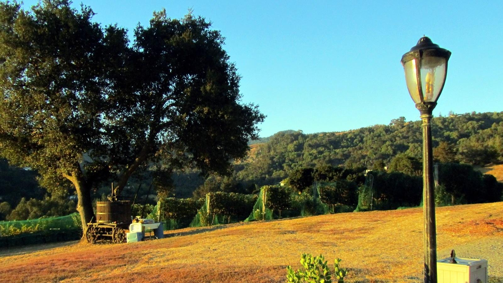 1 Vineyard at dawn