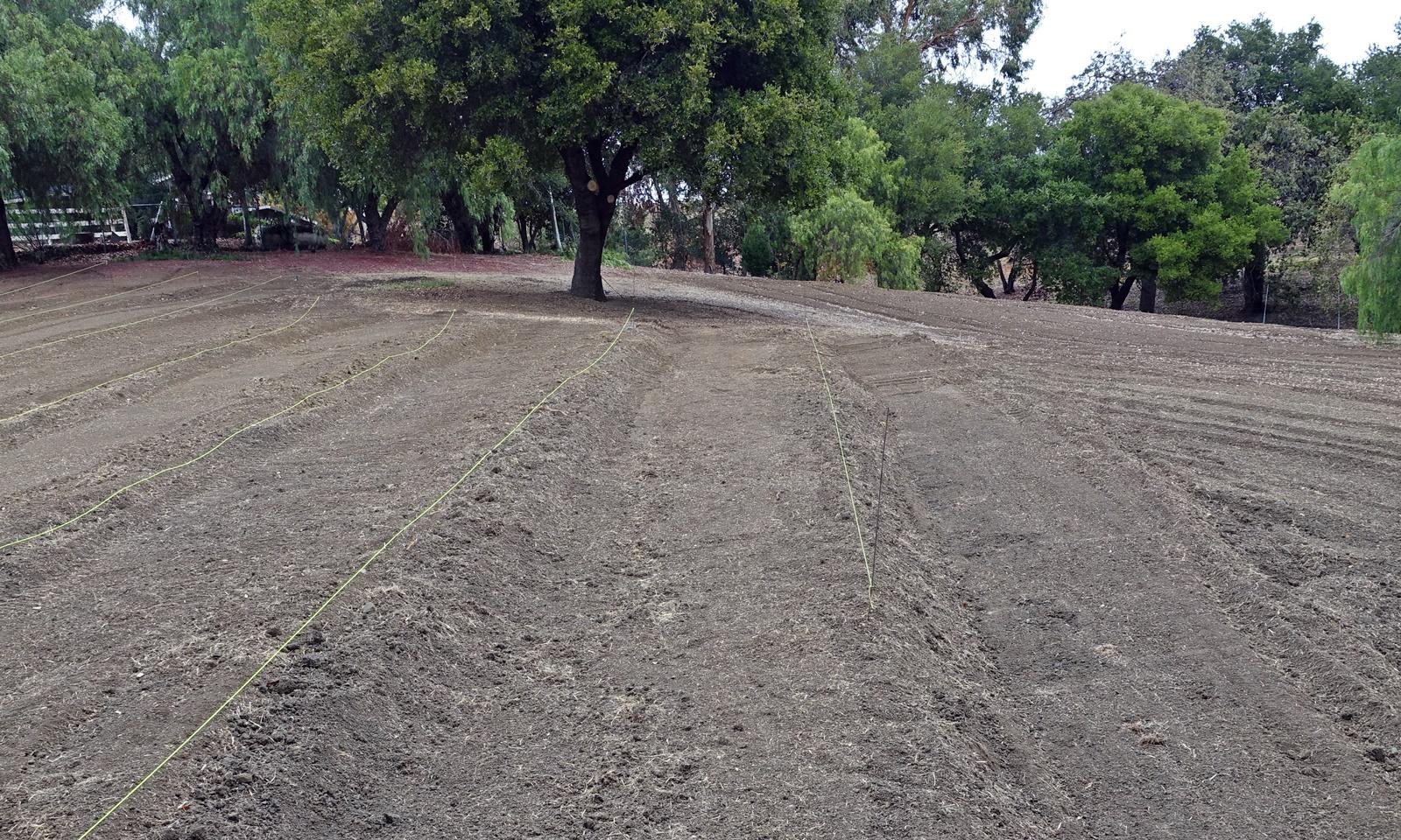 2. Terracing the vineyard