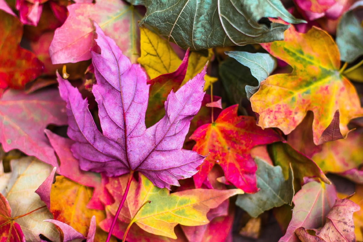 fall colors for weddings