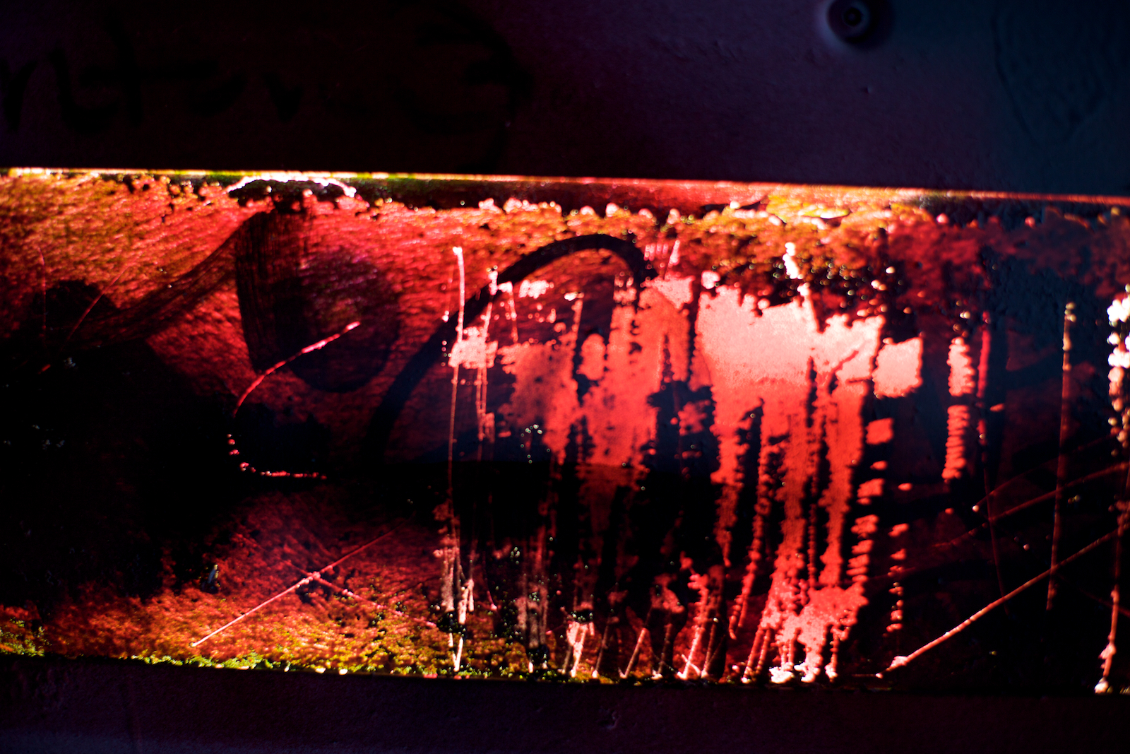 ncsu-expression-015.jpg