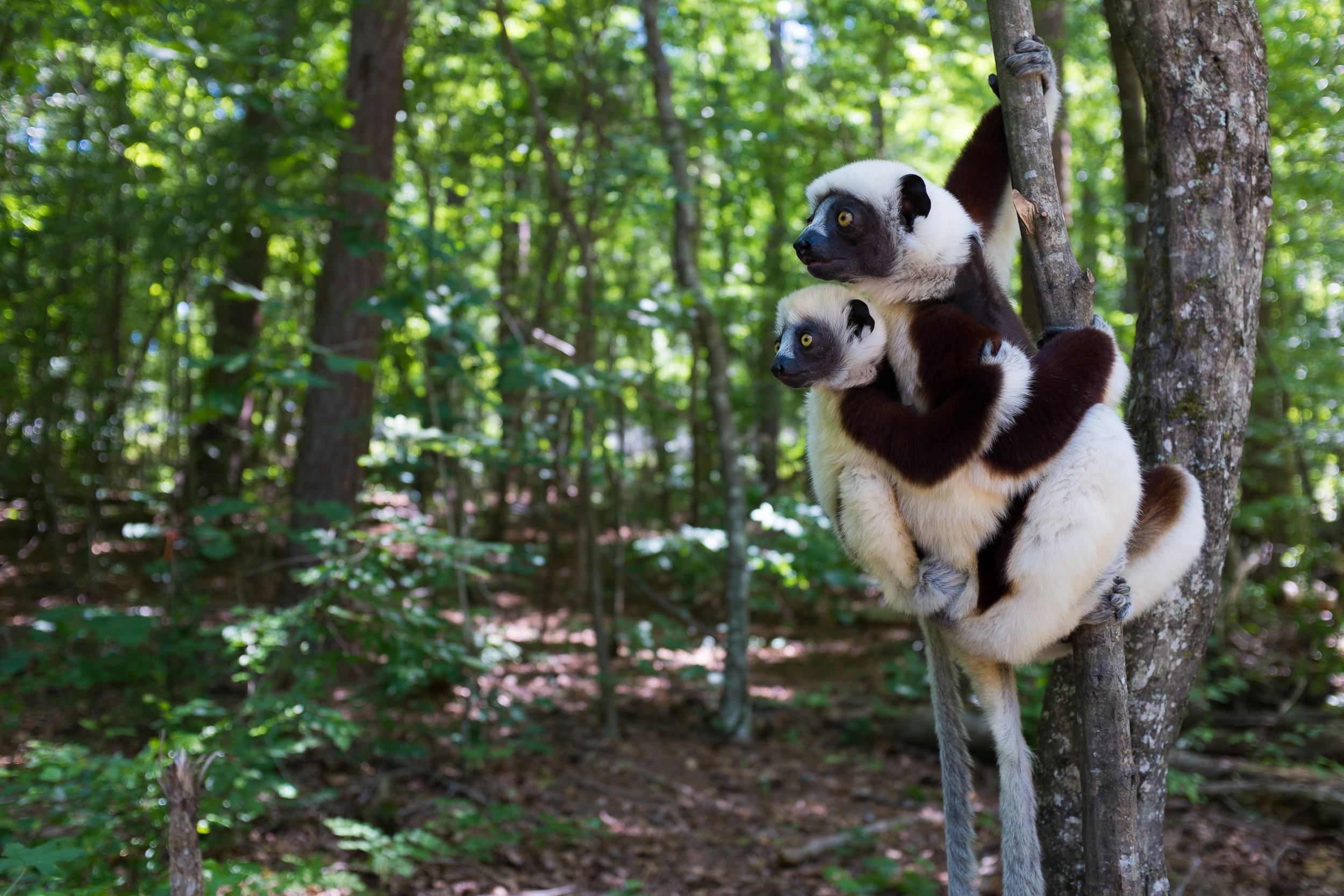 primate-hitchhiker.jpg