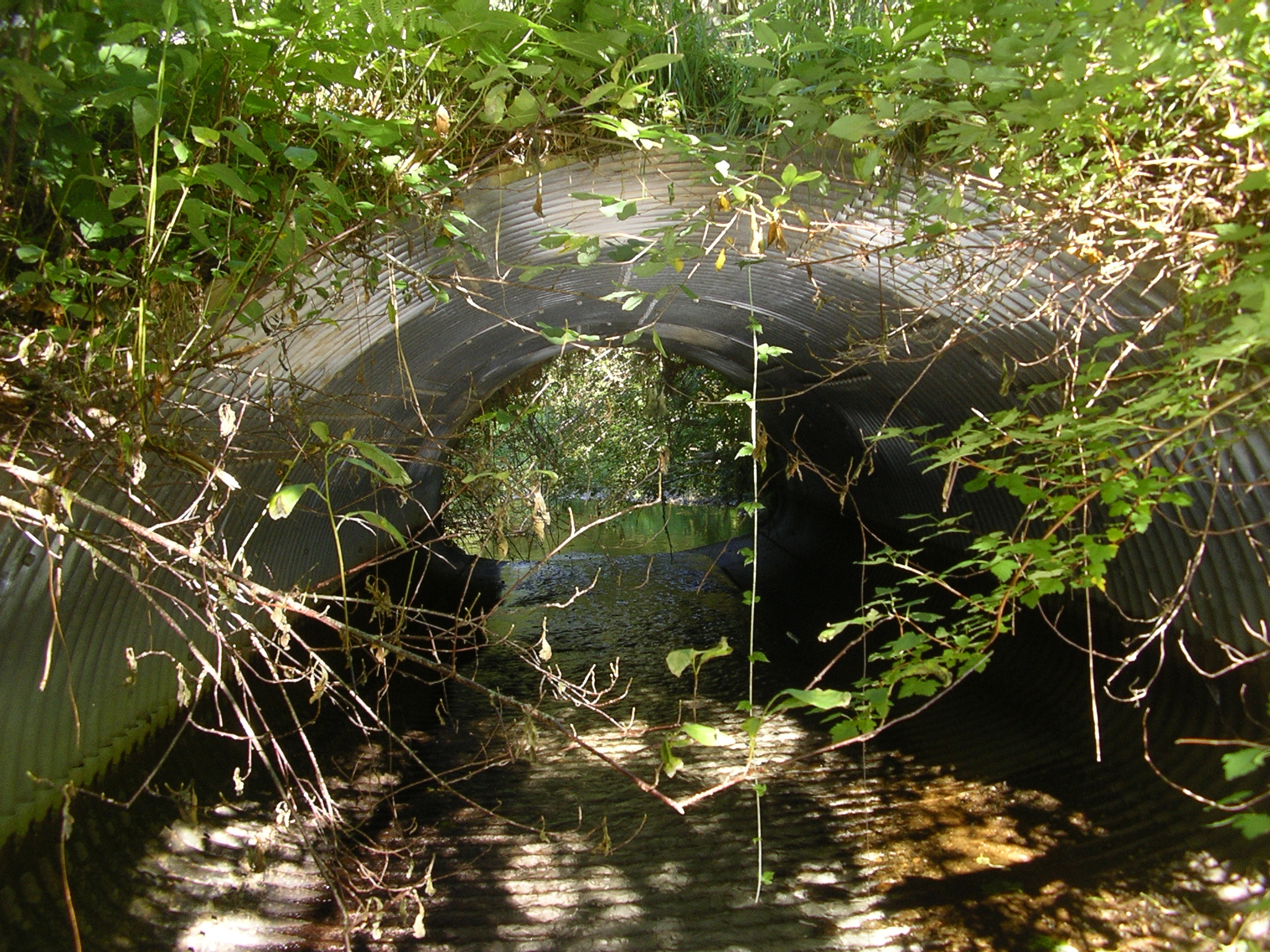 Instream barriers such as culverts like this can limit fish passage to available habitat.