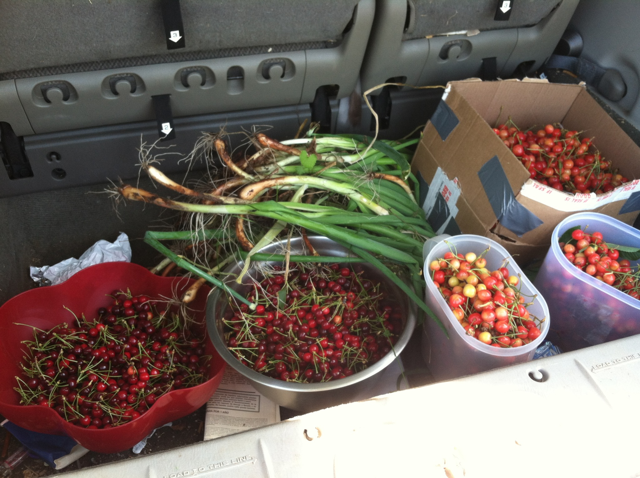 Here is the haul: two types of cherries and wild onions.
