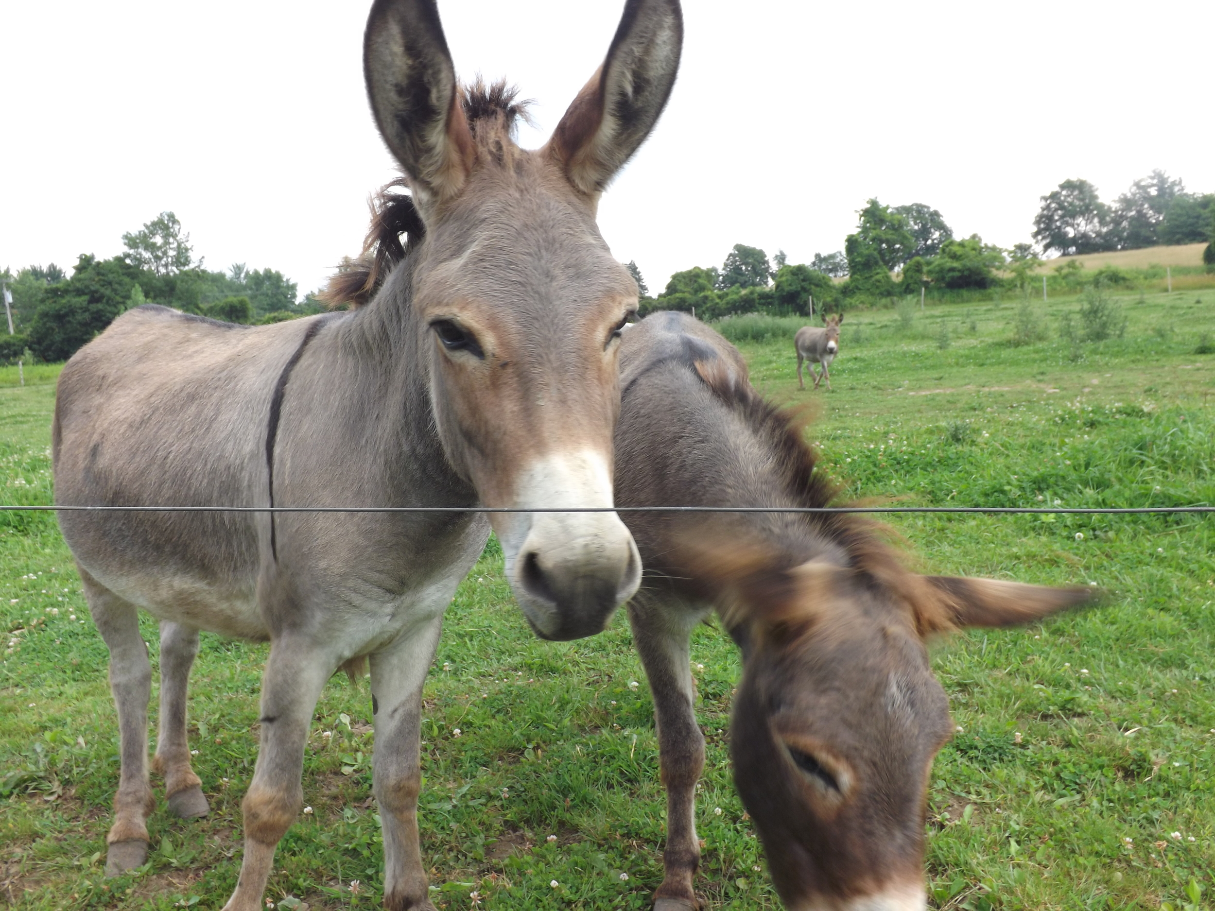 Happy birthday Broc!!!!! The donkeys are looking so nice lately as there winter coats have finally shedded out.
