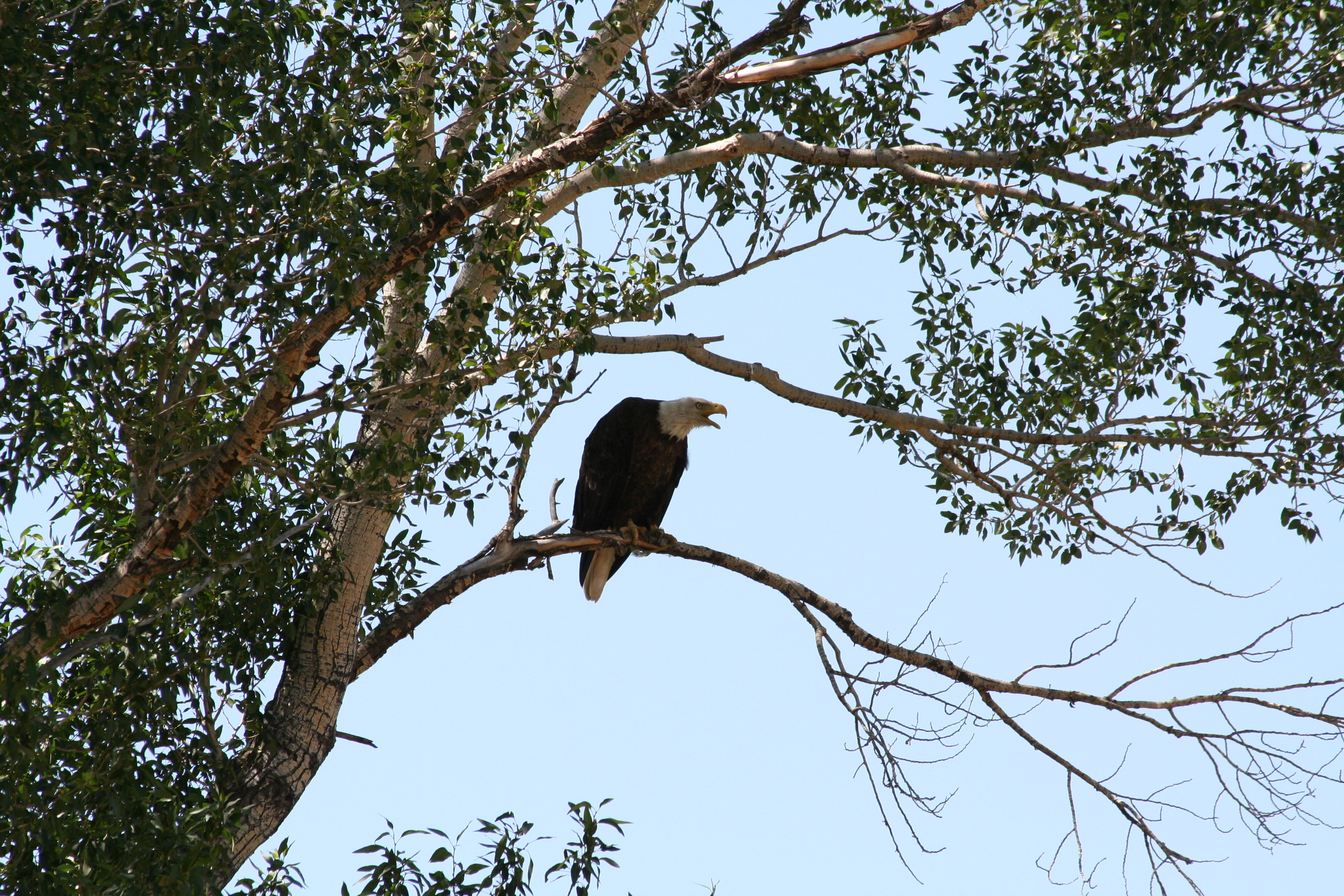 raptor nests 015.jpg