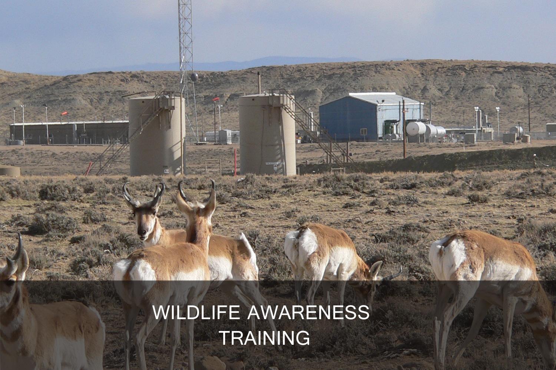 Wildlife awareness training