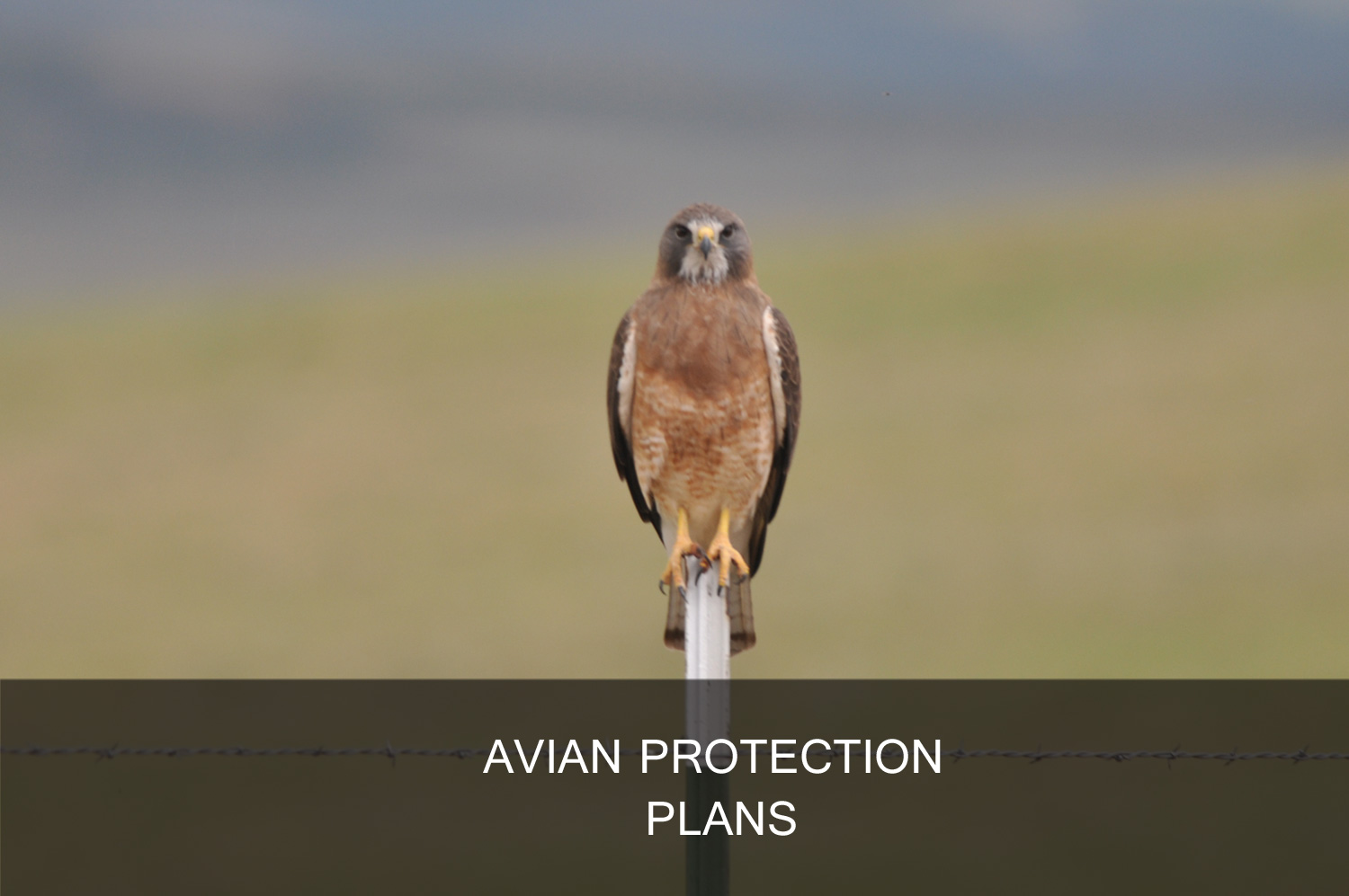 Avian protection plans