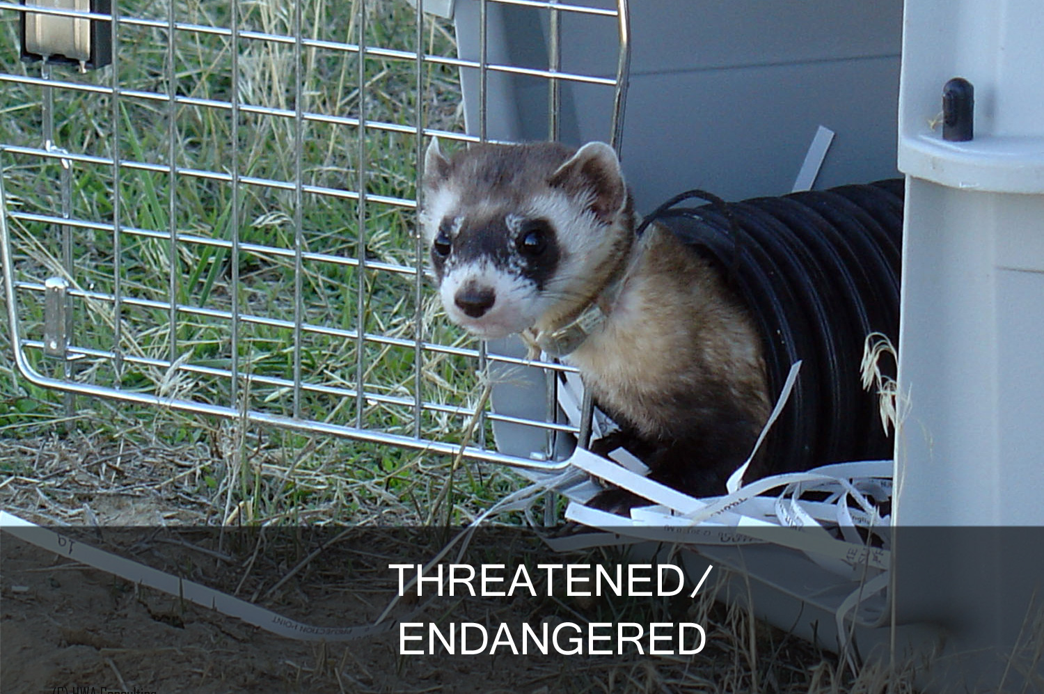 threatened/endangered