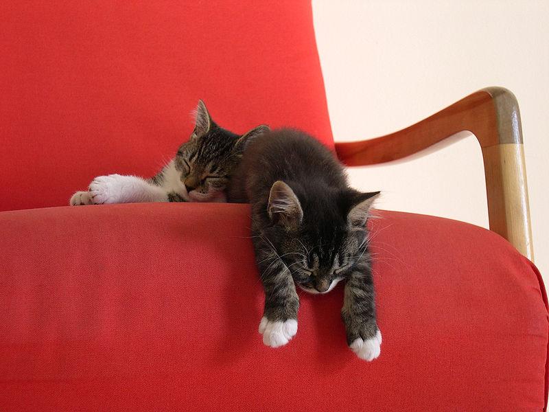 800px-Louis-&-Chanel-taking-a-nap.jpg
