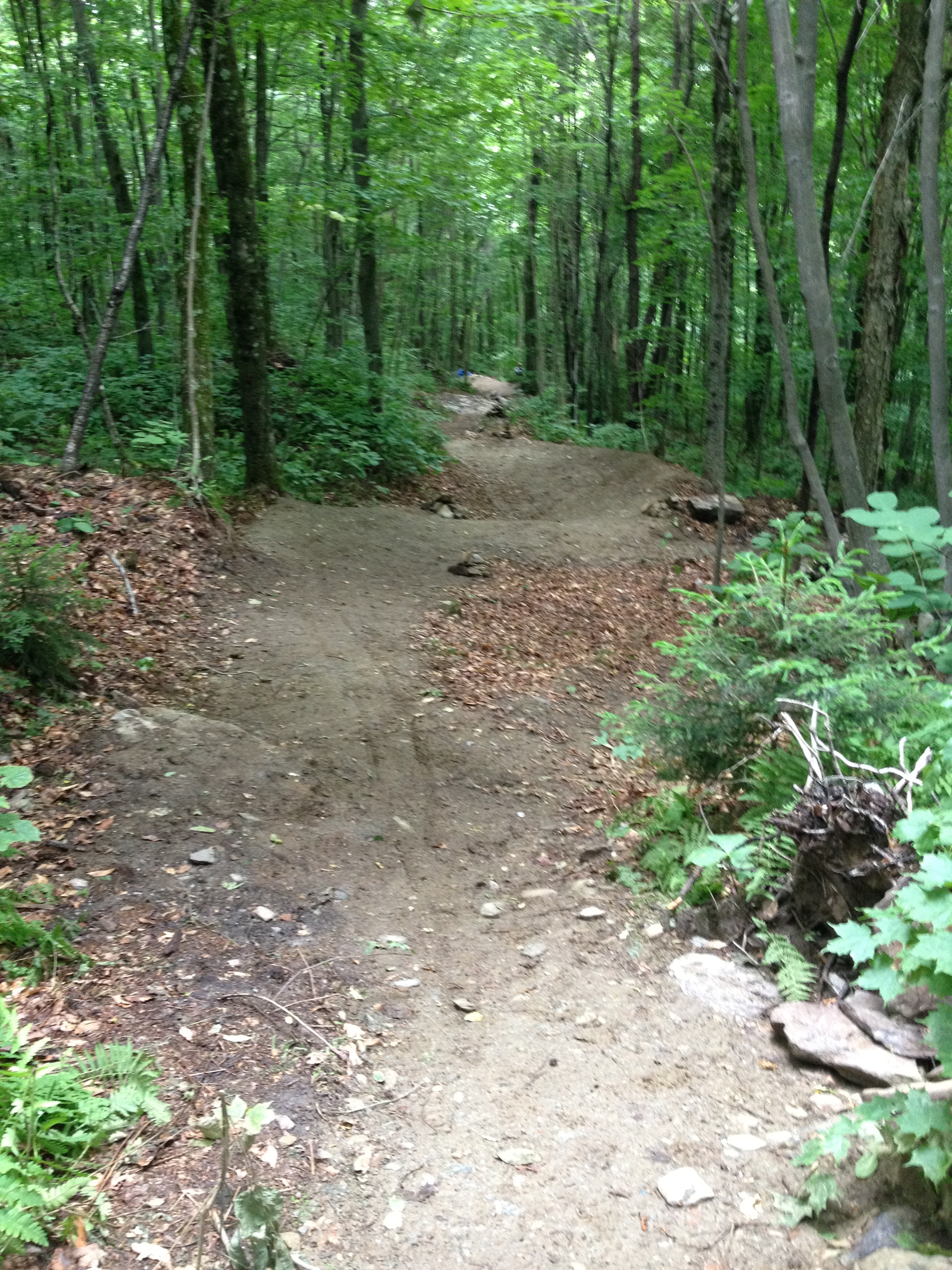 Chain Gang mountain bike trail berms and drainage in Camel's Hump State Park.