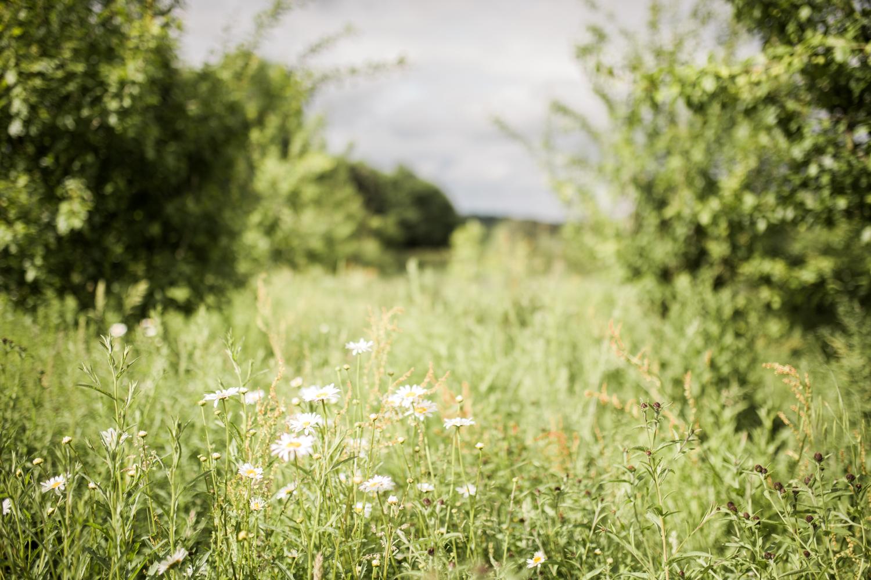Daylesford Farm Wedding, Cotswold wedding photographer, Sophie Evans Photography-46.jpg