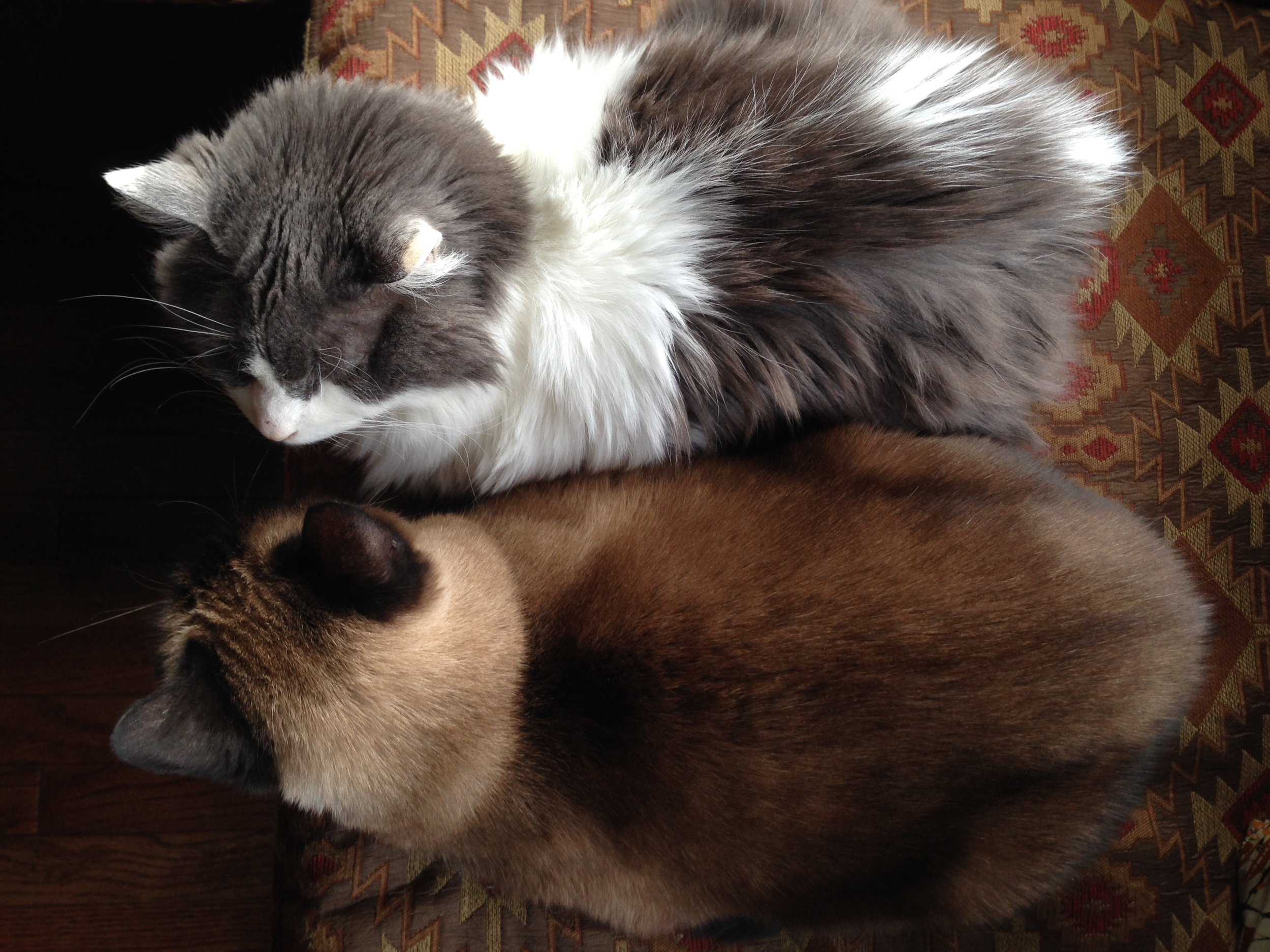 Gratuitous photo of those darned cats