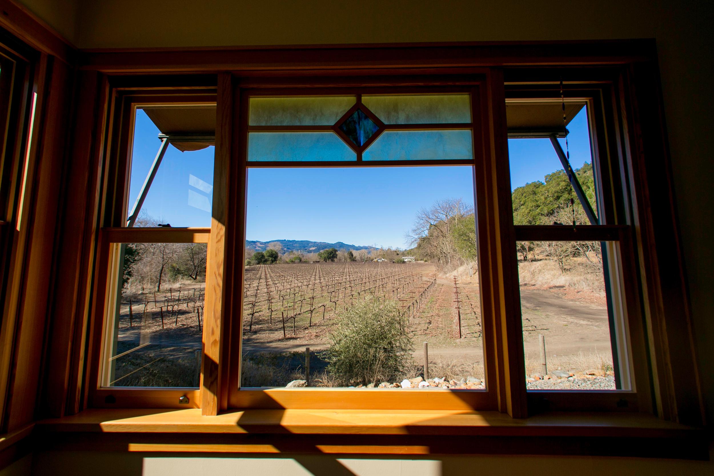 Vineyards and vineyards and vineyard for miles