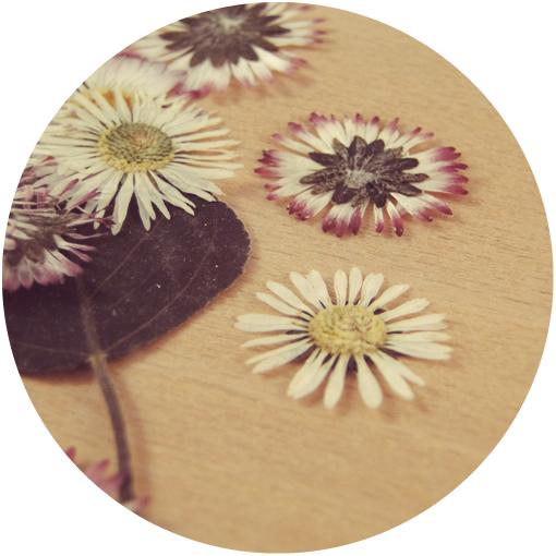 pressed flowers.png