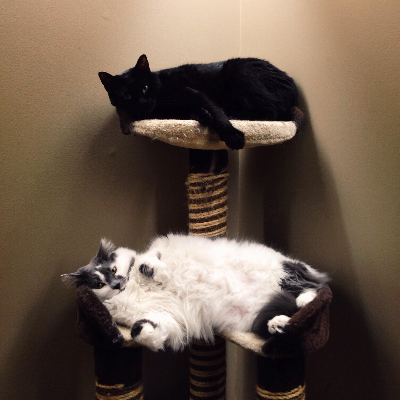 Bunk bed buddies!