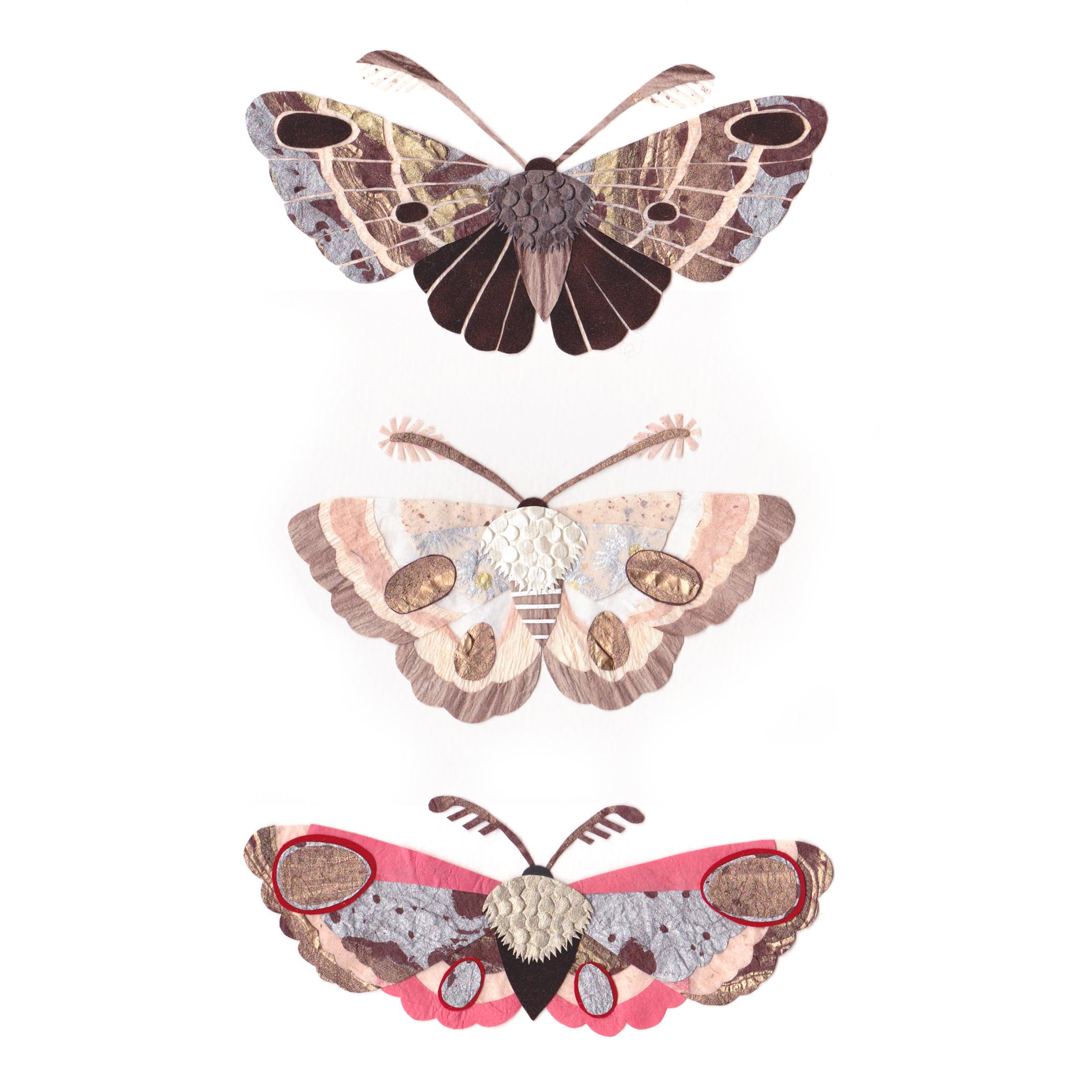 Paper Moths Tara Galuska