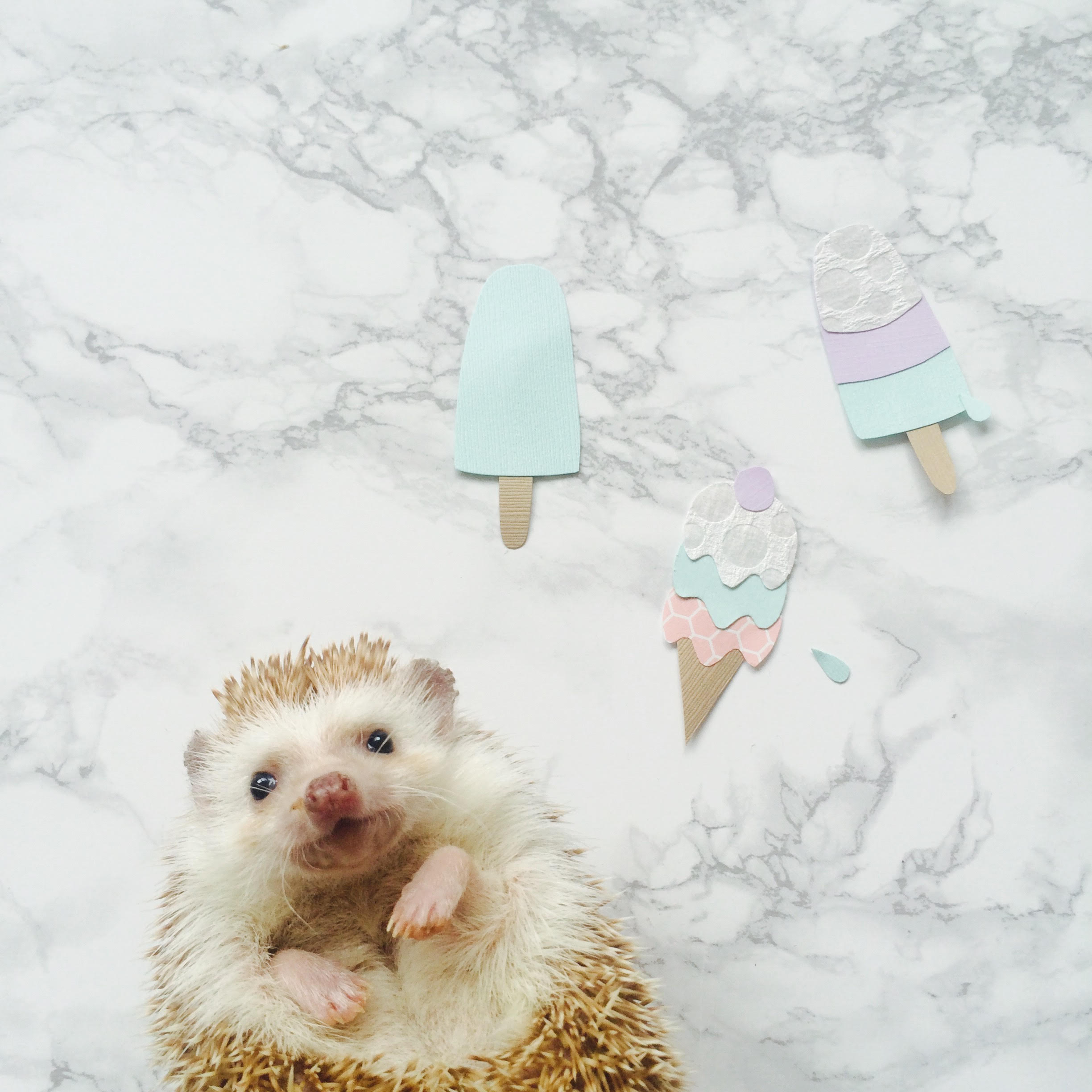 Amelia Hedgehog the hedgehog has a taste for ice cream and paper art!