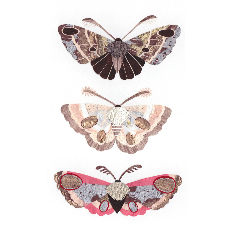 Paper Moth Artworks Tara Galuska