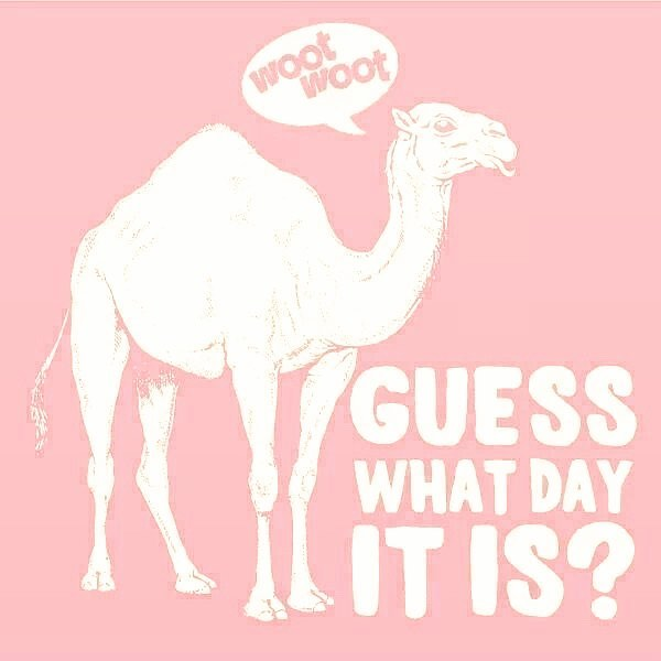Happy Hump Day y'all!