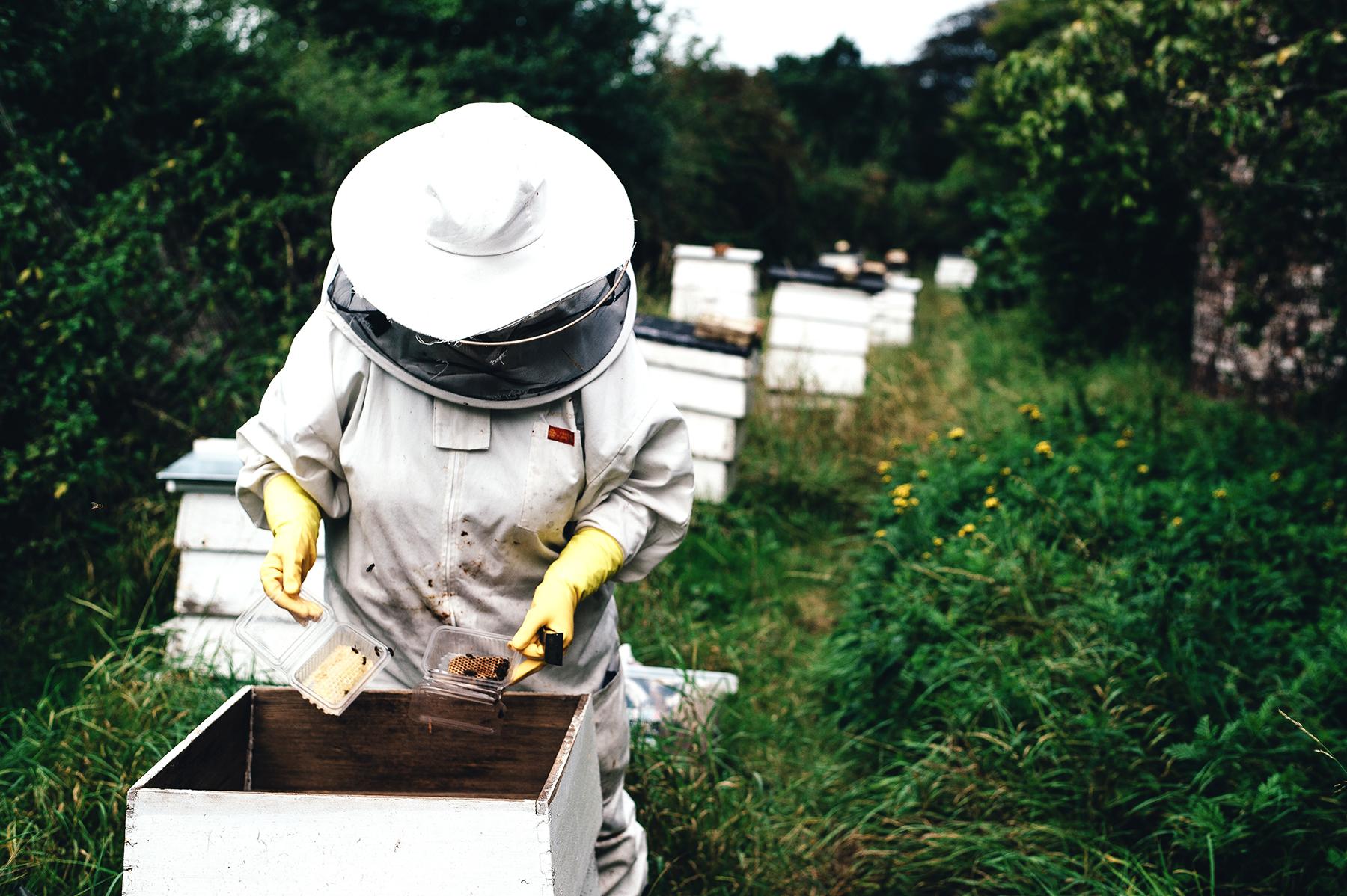 Eltham-Bees-Beekeeper.jpg