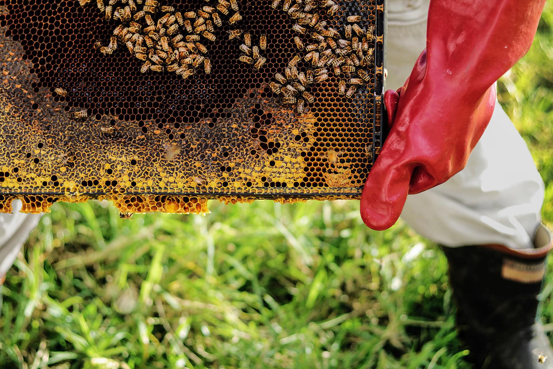 Eltham-Bees-Beehive.jpg