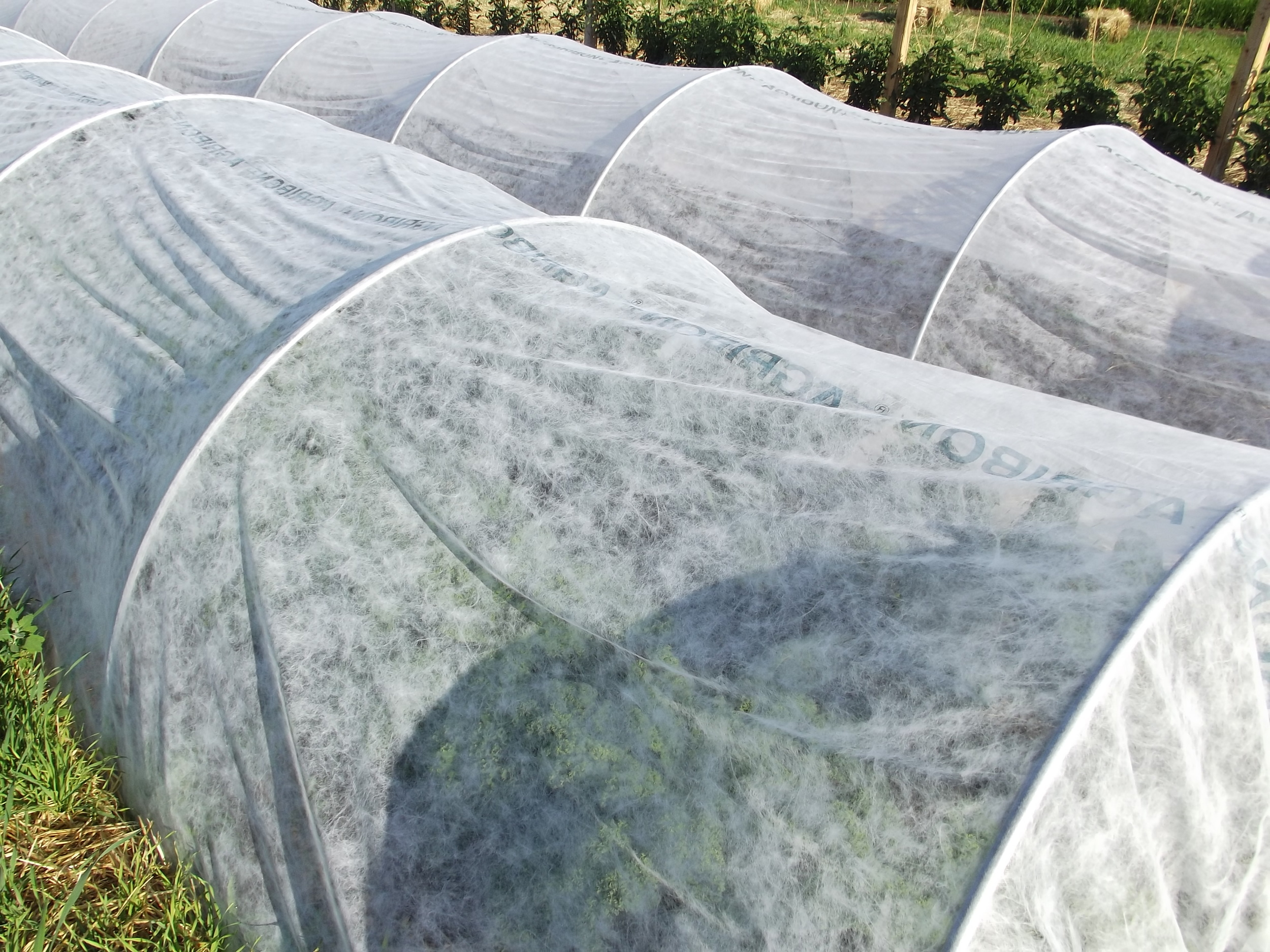 insect barrier row covers.JPG