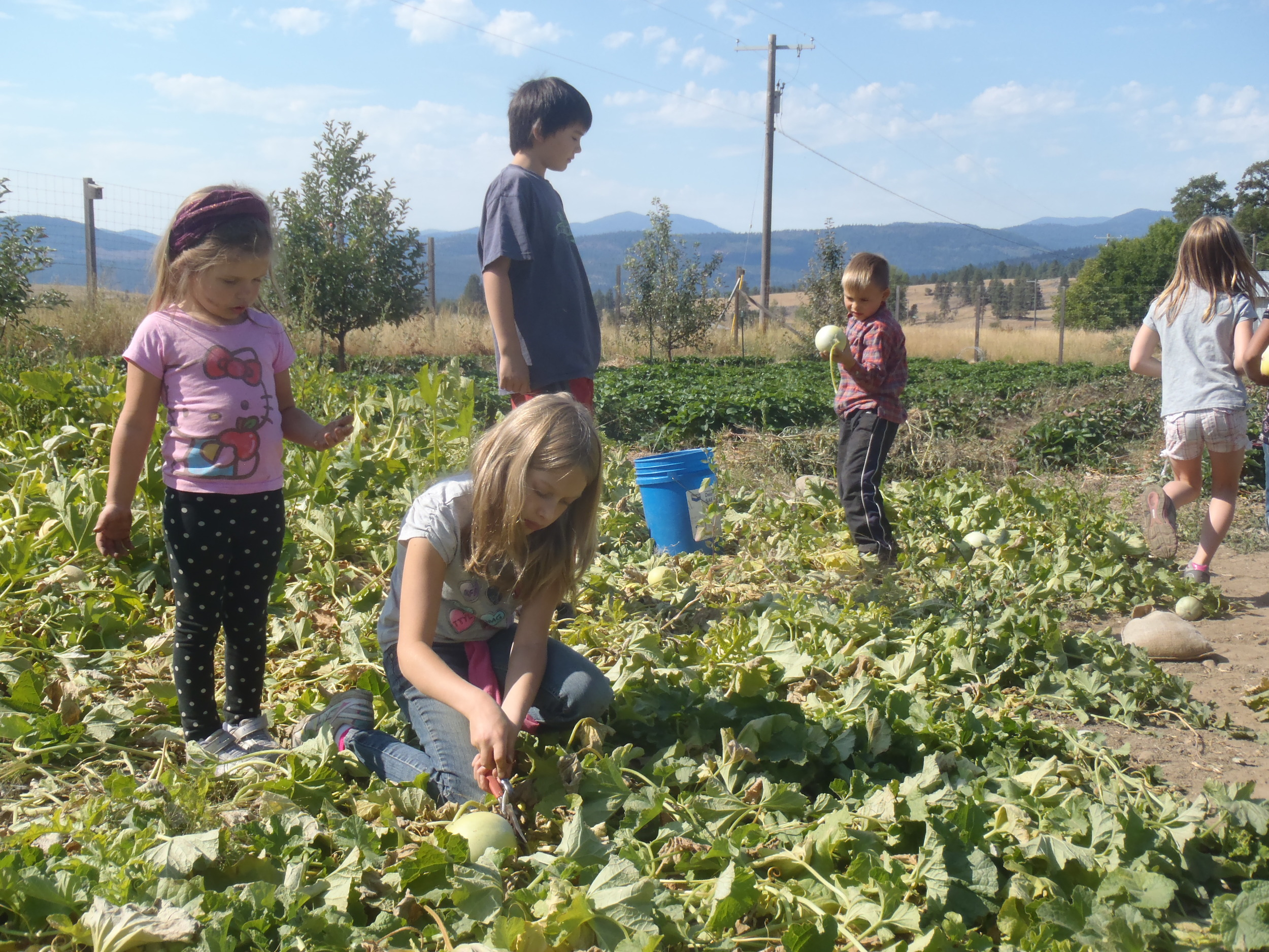 Riverwood school kids harvest melons