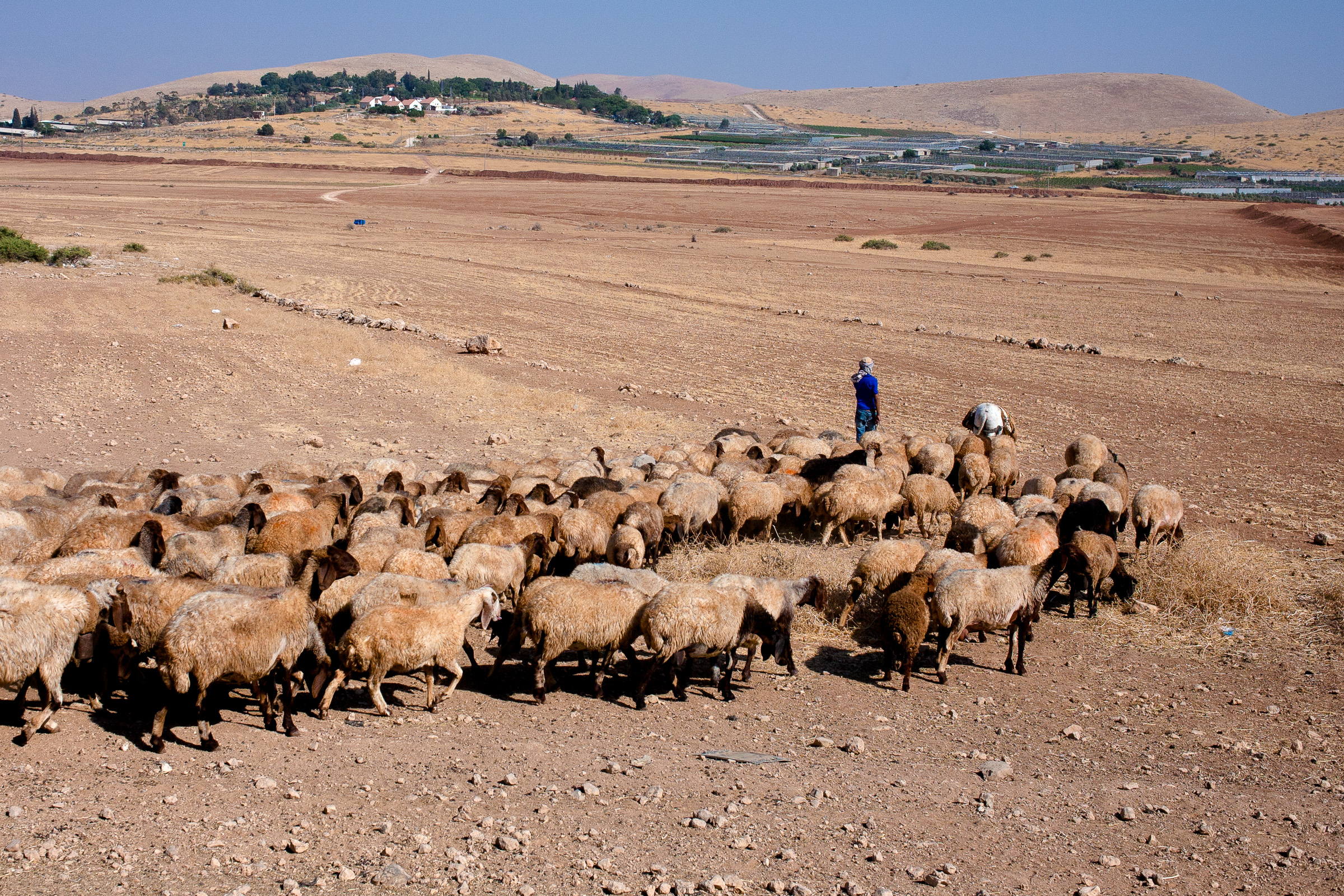 A Palestinian sheep farmer looking at a Israeli settlement that controls the water supply, in the district of Tubas.