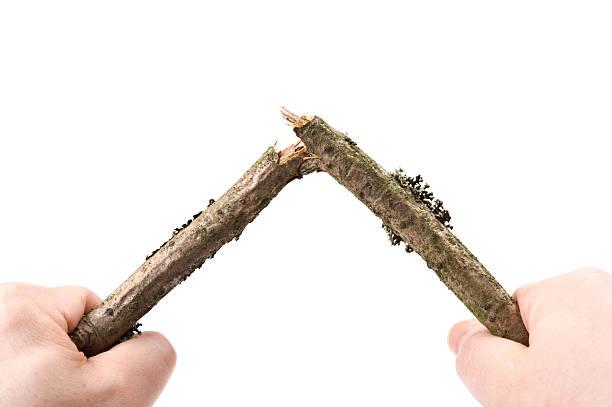 breaking branch.jpg