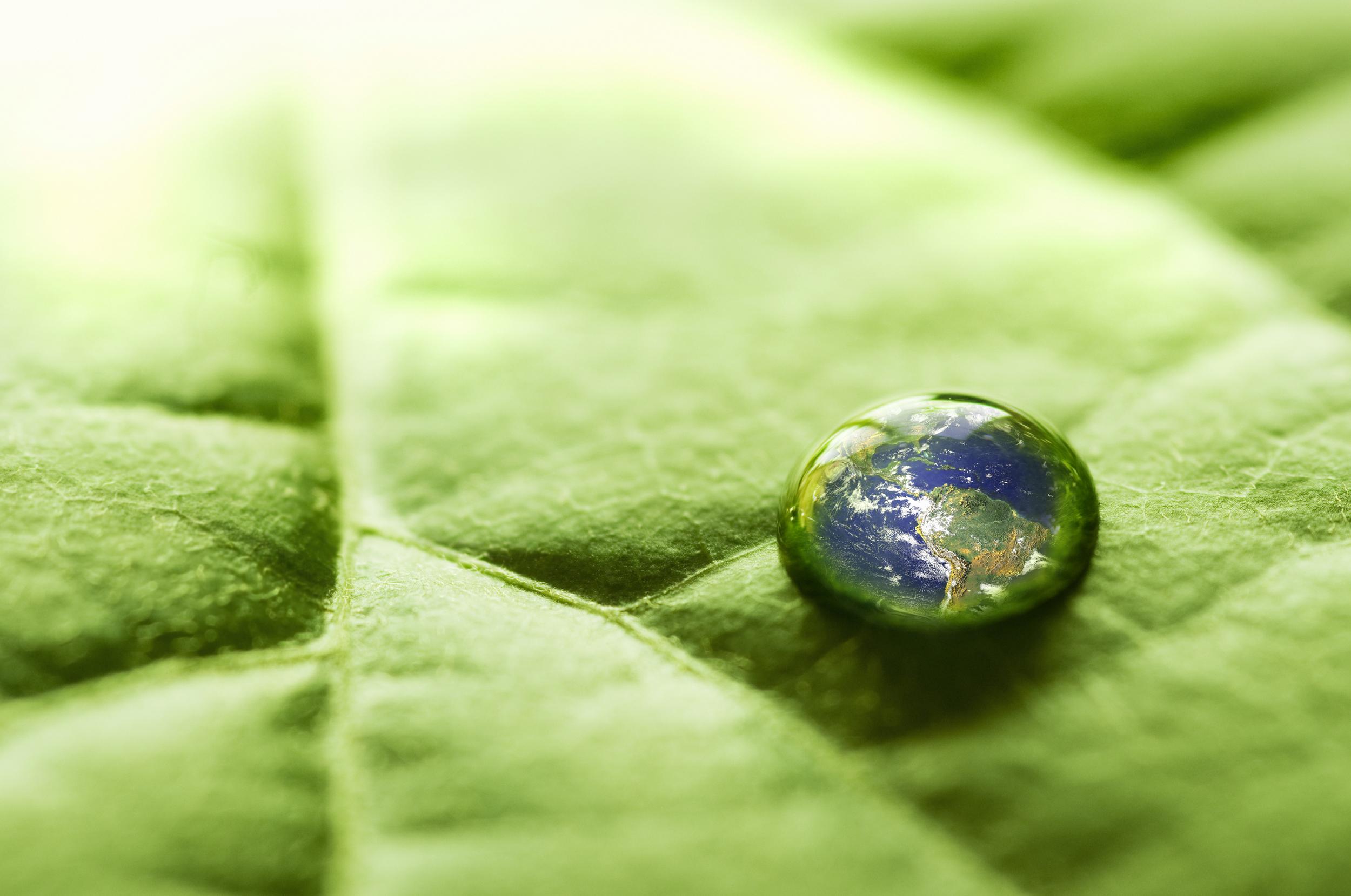Leaf w Water drop Globe.jpg