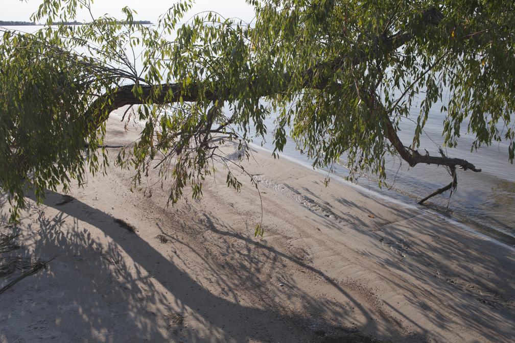 WP-030, William Pura, Lake Winnipeg Fallen Tree Patricia Beach Aug 28 2012, $2,000