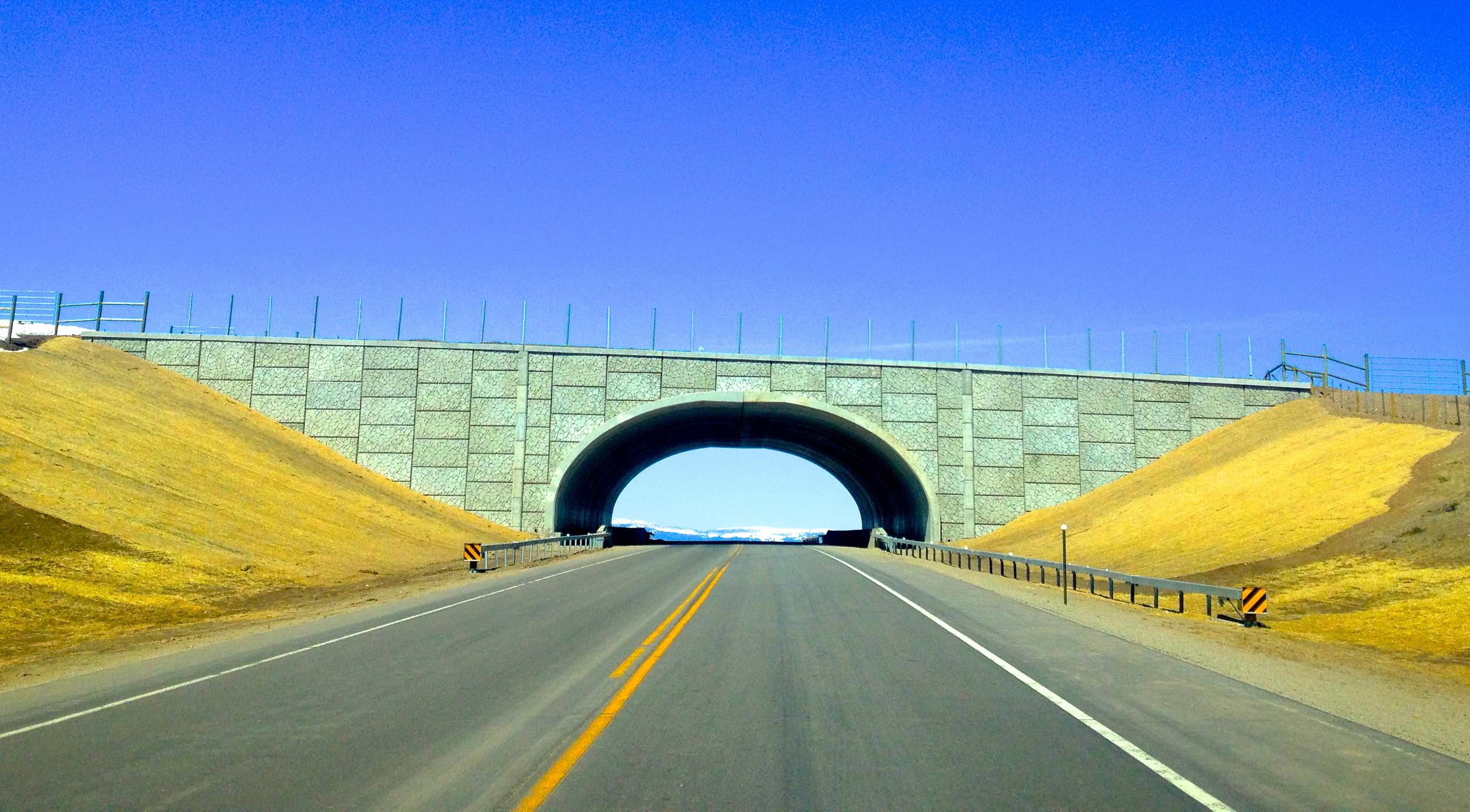 Pronghorn Roadway Crossing