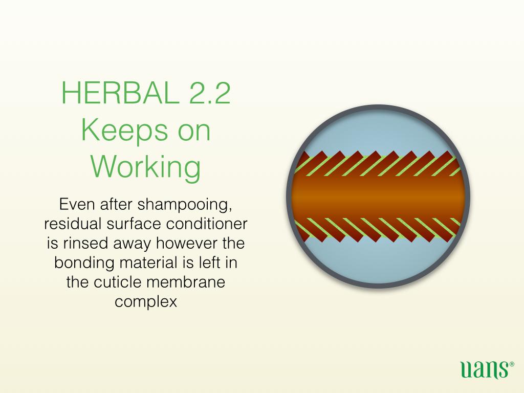 Herbal 2.2 Presentation (English).006.jpg