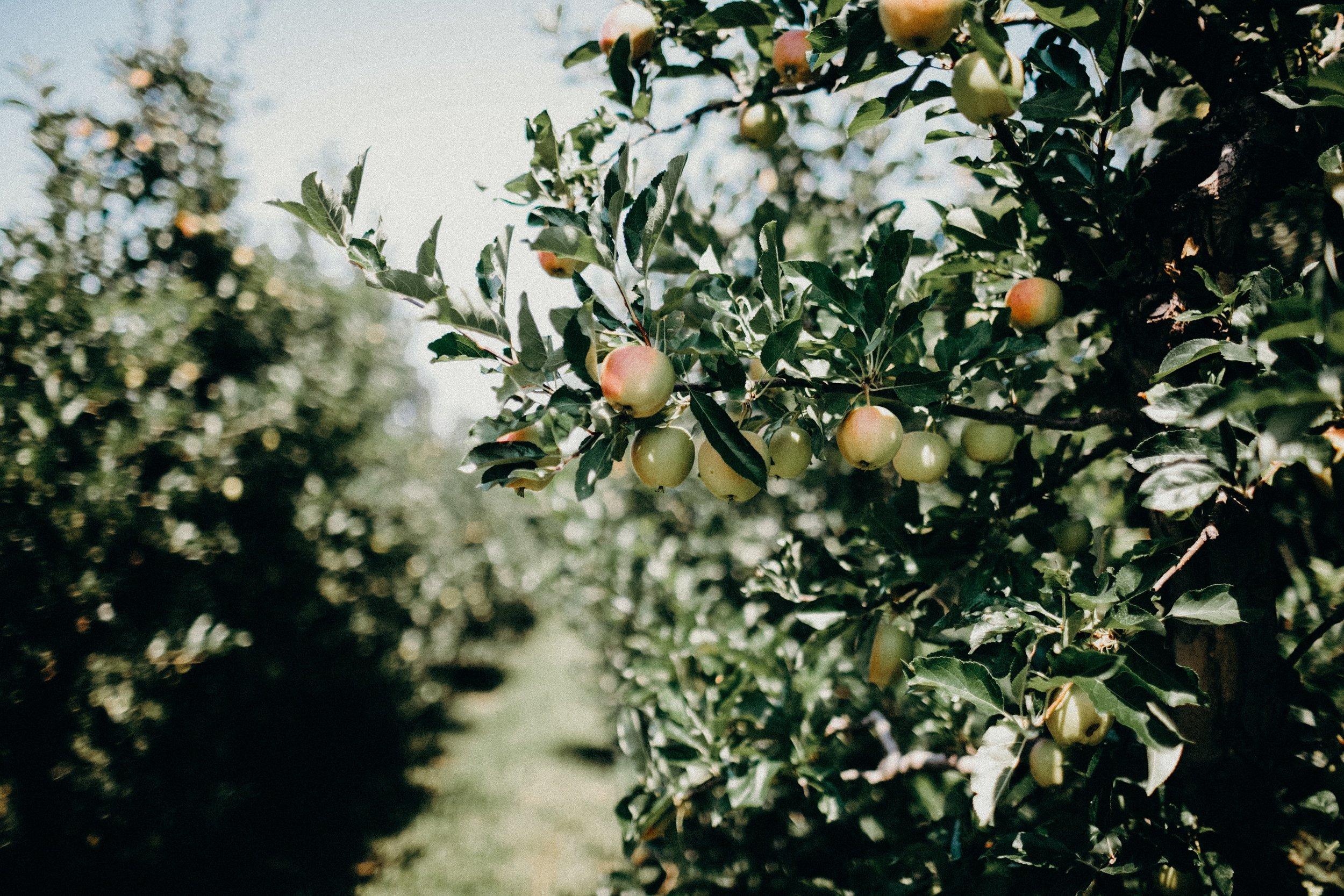 minneapolis-fall-orchard-family-mini-sessions-mn.jpg