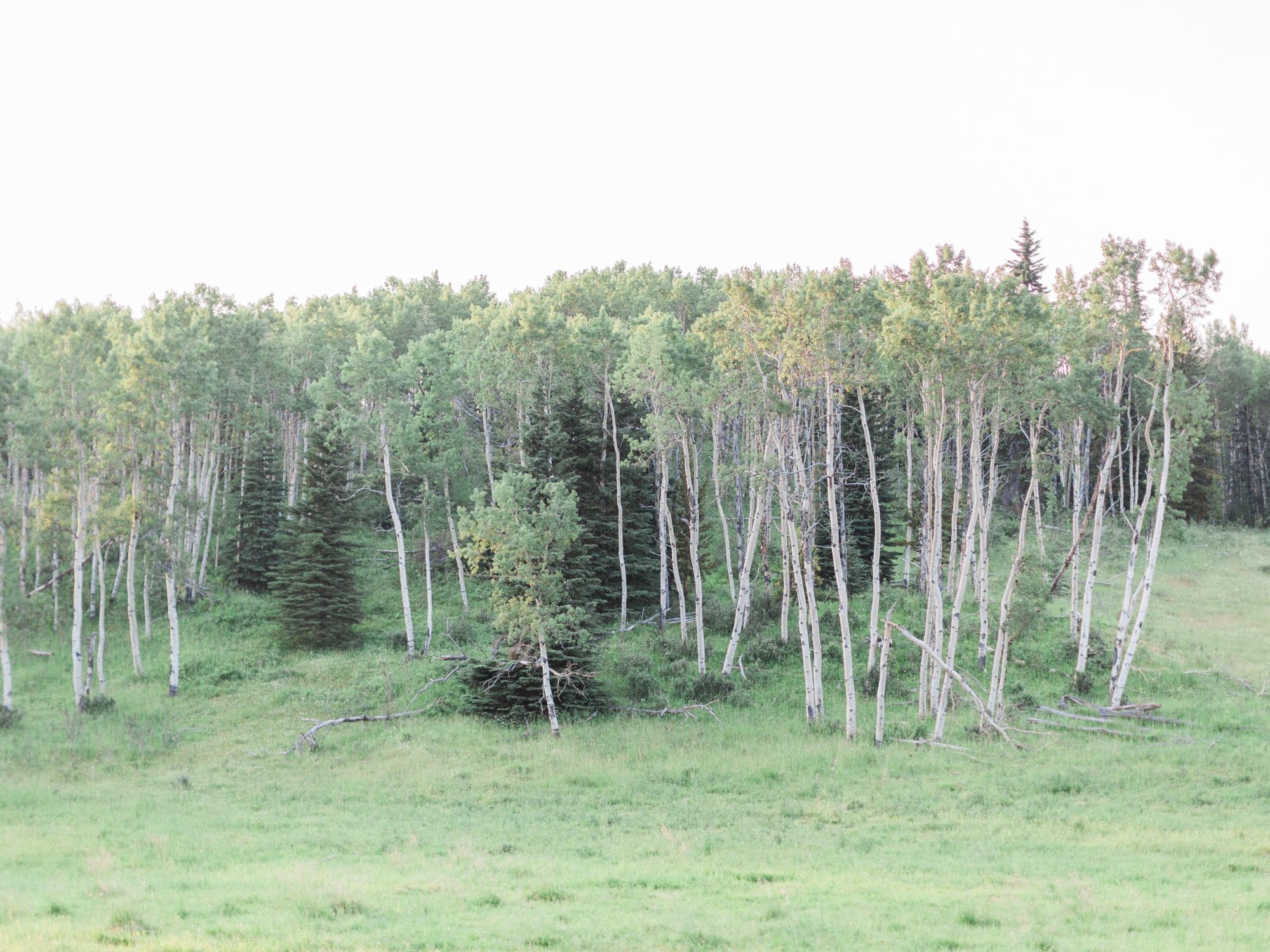 Calgary-Engagement-Photograher-Kananaskis-Country-8.jpg