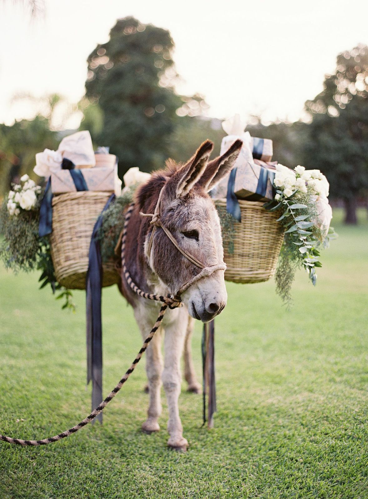Our beautiful gifts, each wrapped with hand stamped wrapping paper, look darn cute on our favorite donkey!  ( and yes they are empty and light- we even tried it out ourselves to make sure....)
